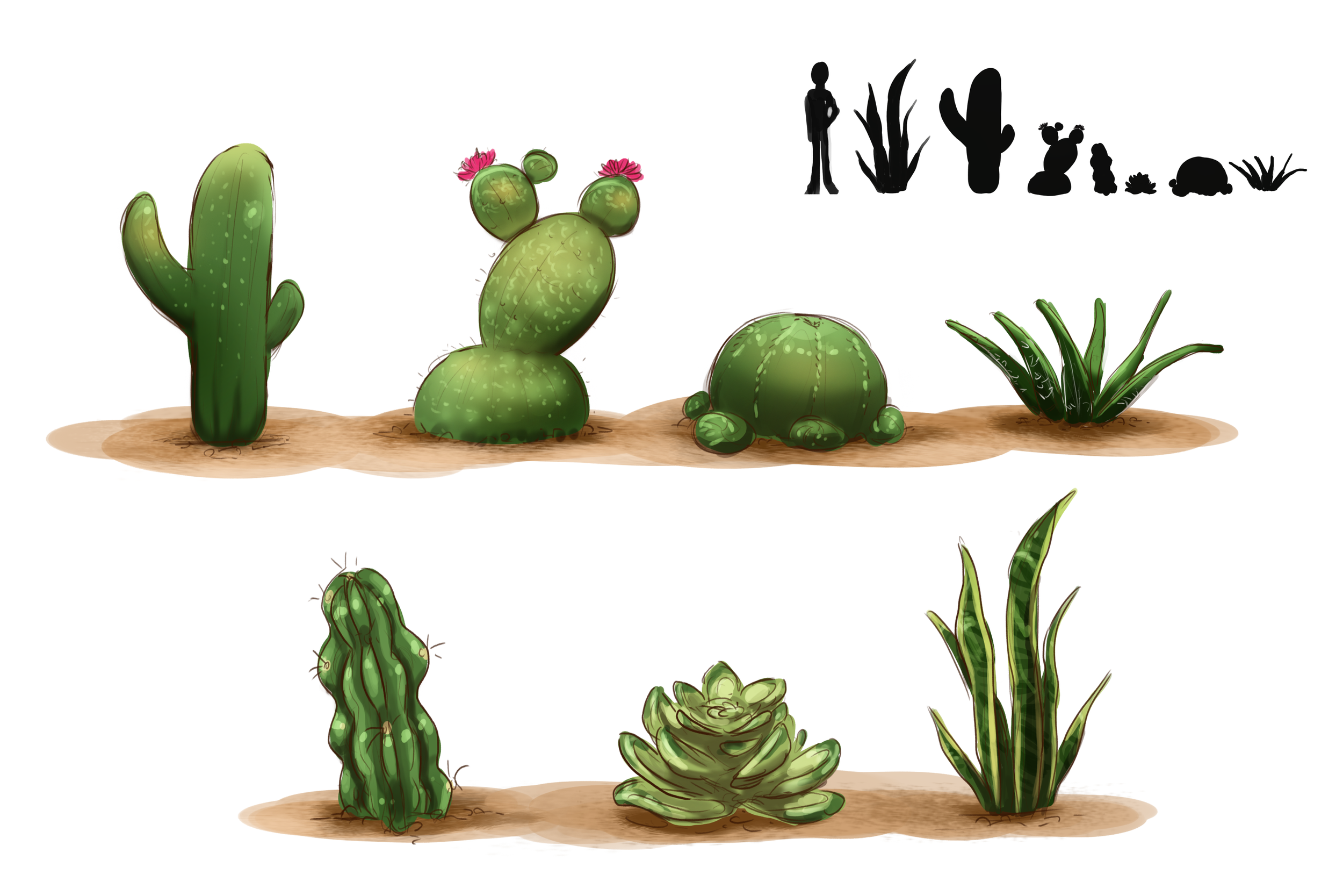 Early concept   Different species of cacti