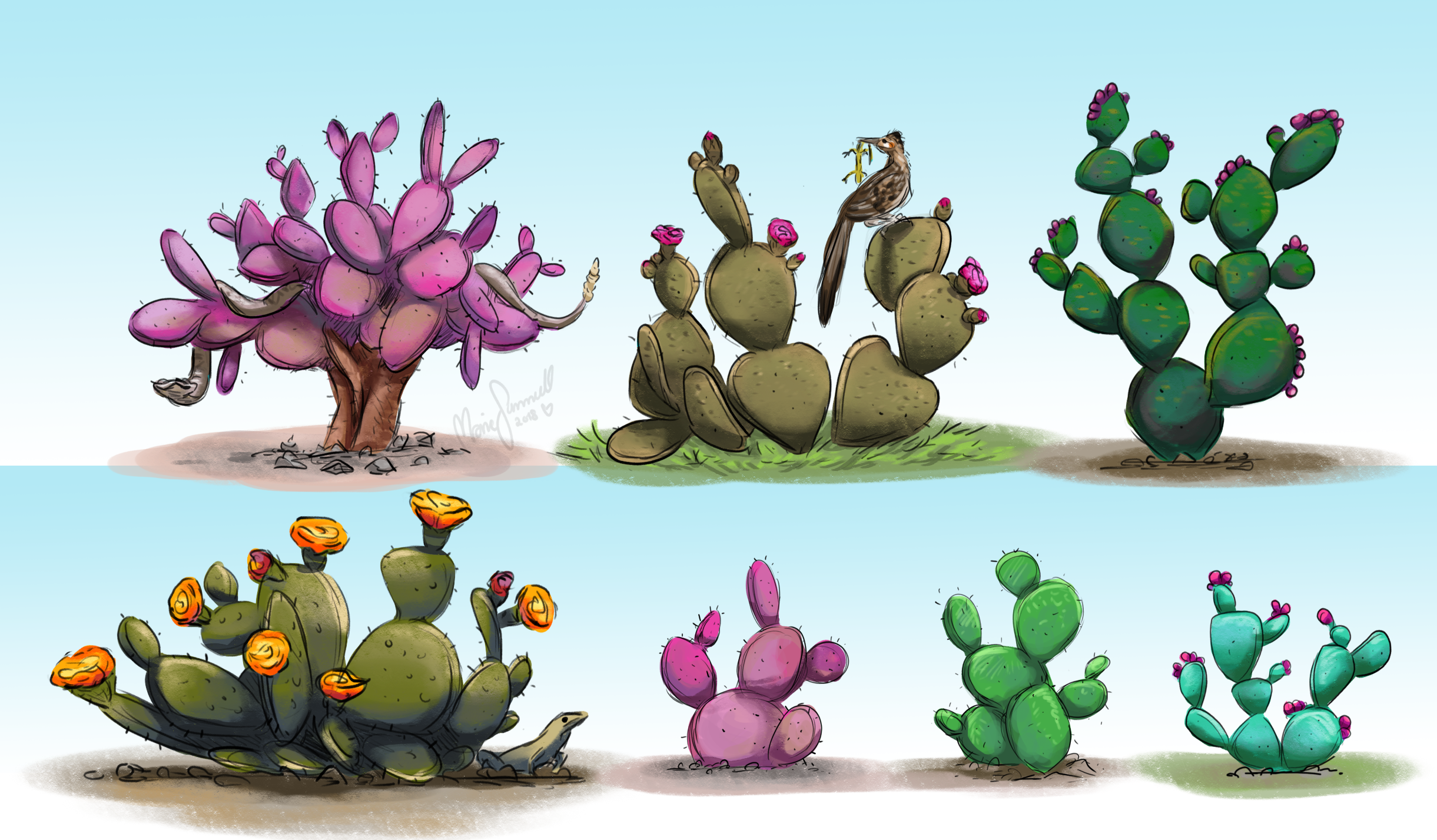 Concept   Different varieties of prickly pears