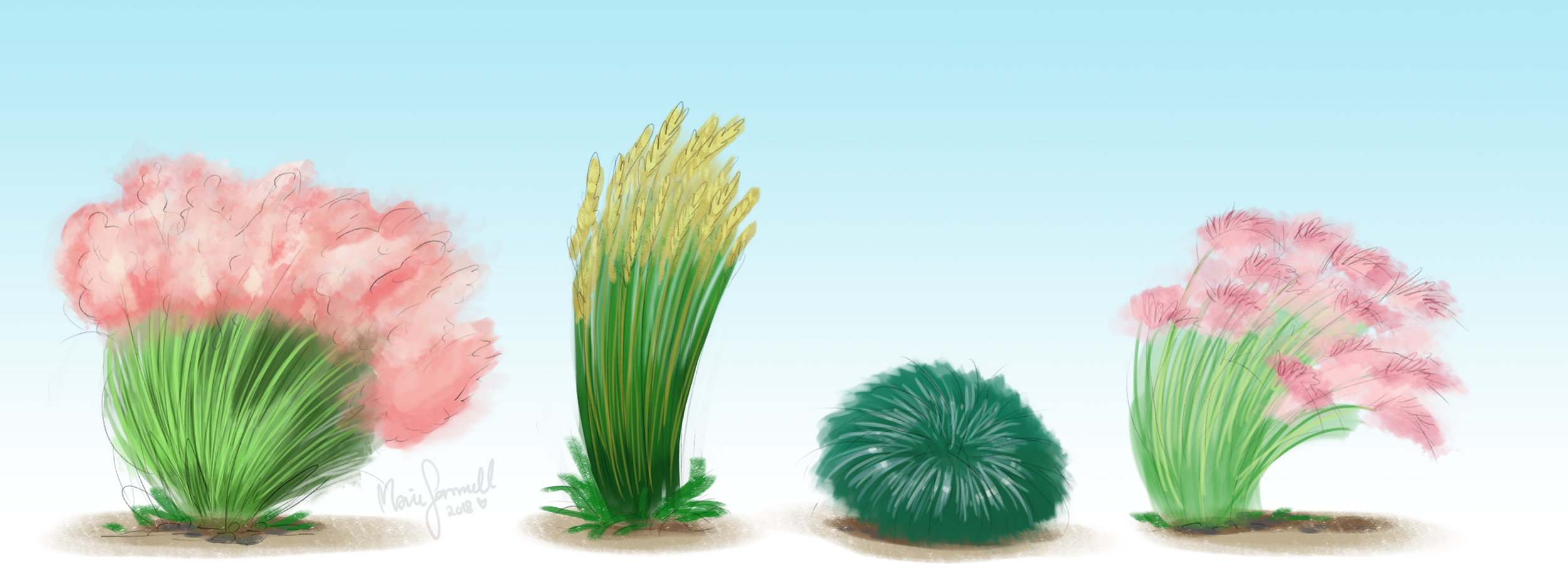 Early concept   Different types of desert grass