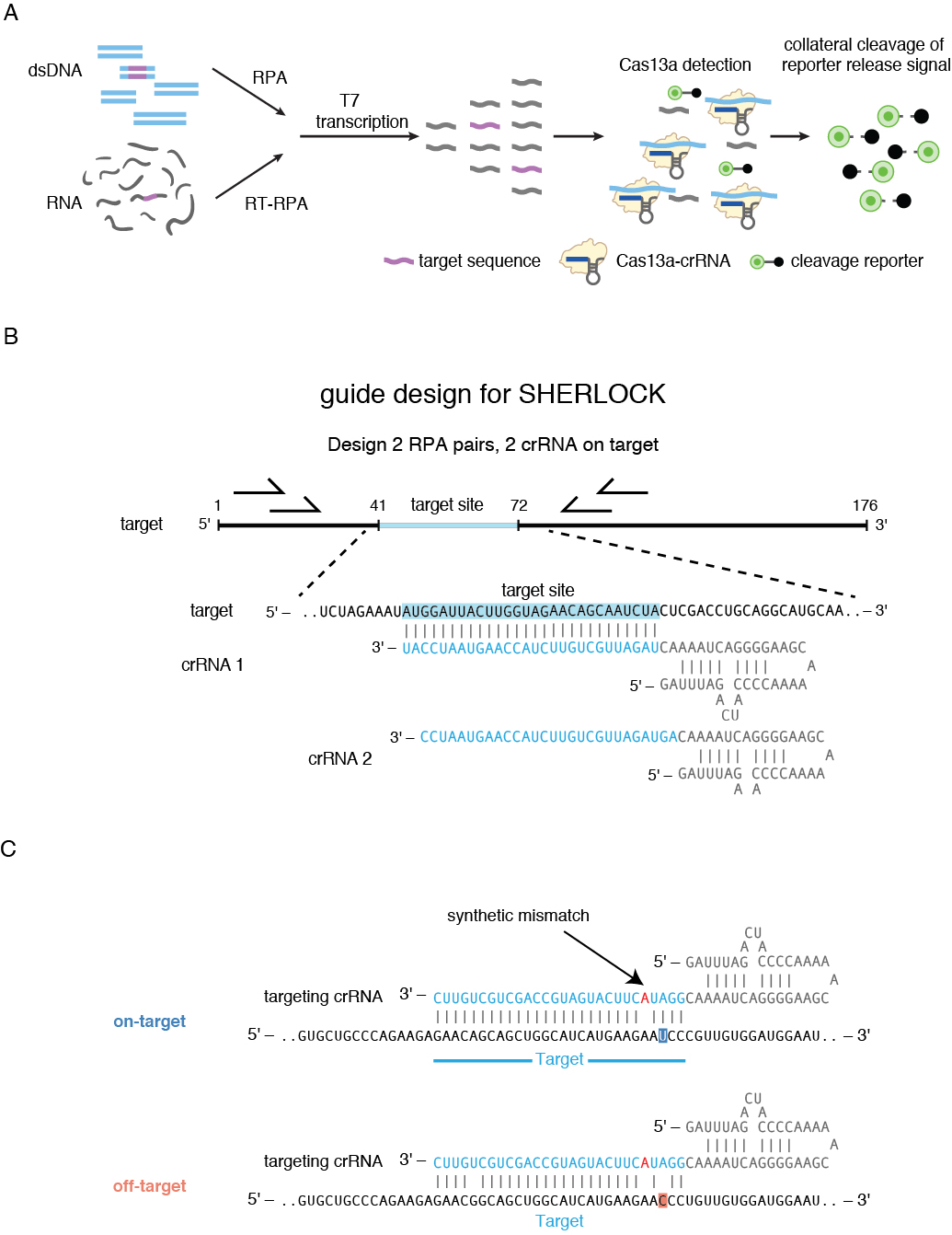 Figure 4.   Nucleic acid detection with SHERLOCK.