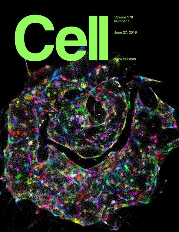 Cell cover.jpg