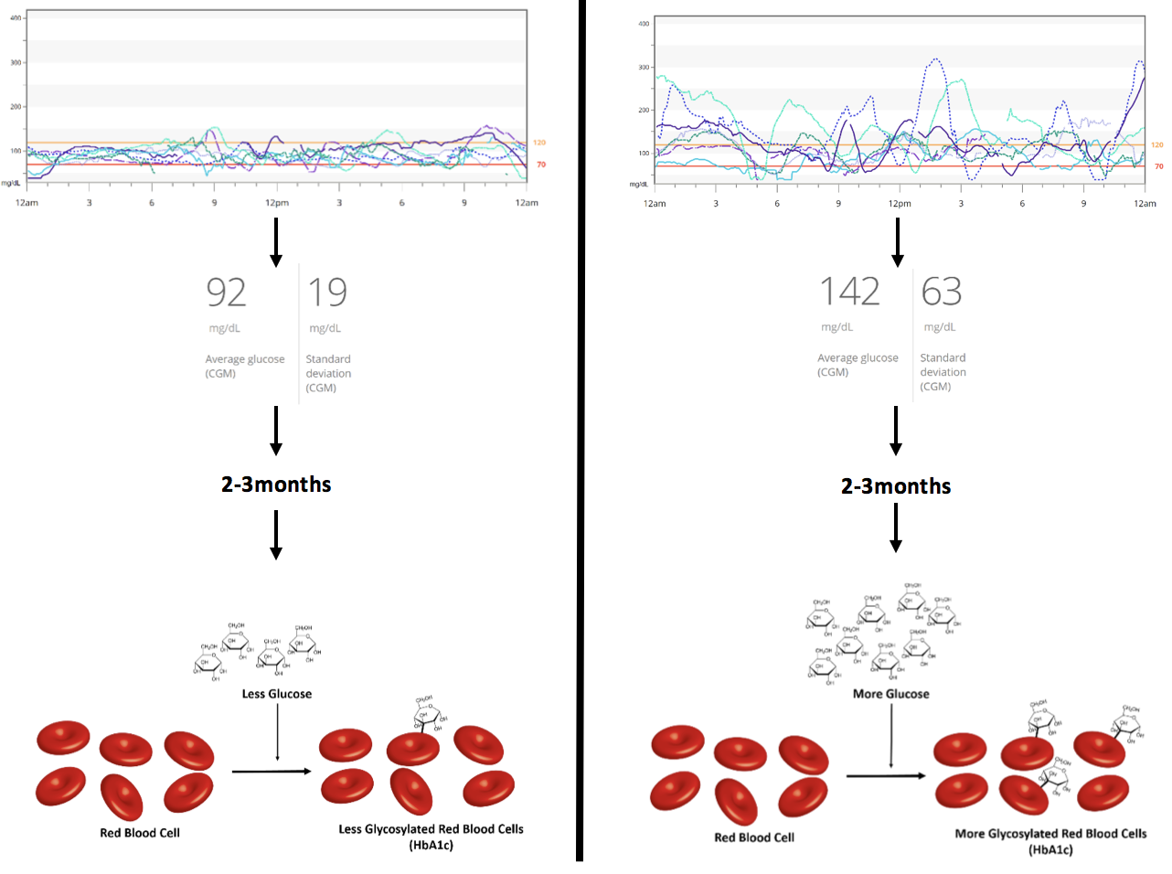 Figure 4 Daily Blood Glucose's Influence on HbA1c Levels.  With higher average blood glucose values, HbA1c increases