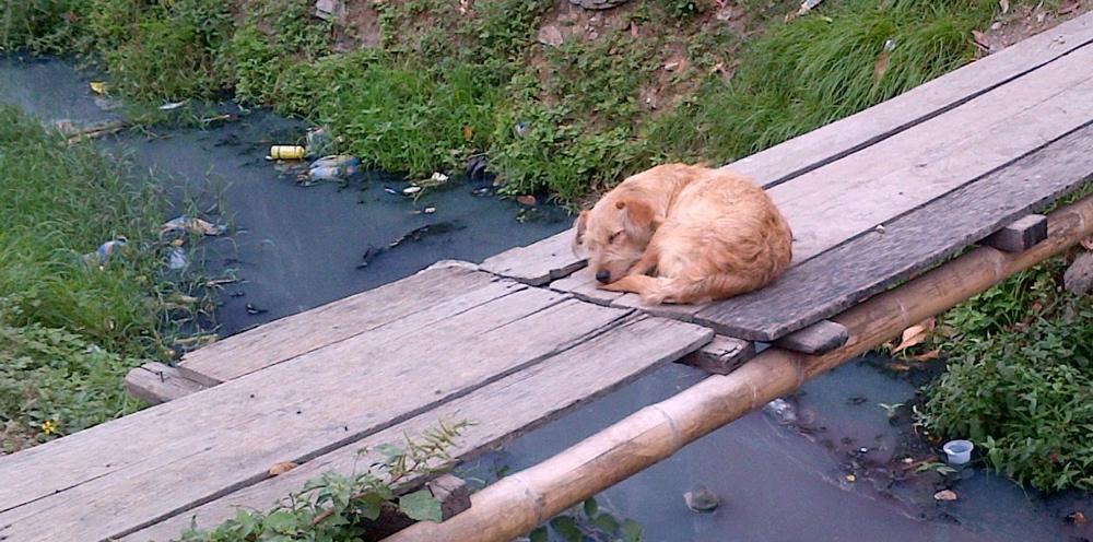 dog bridge.jpg