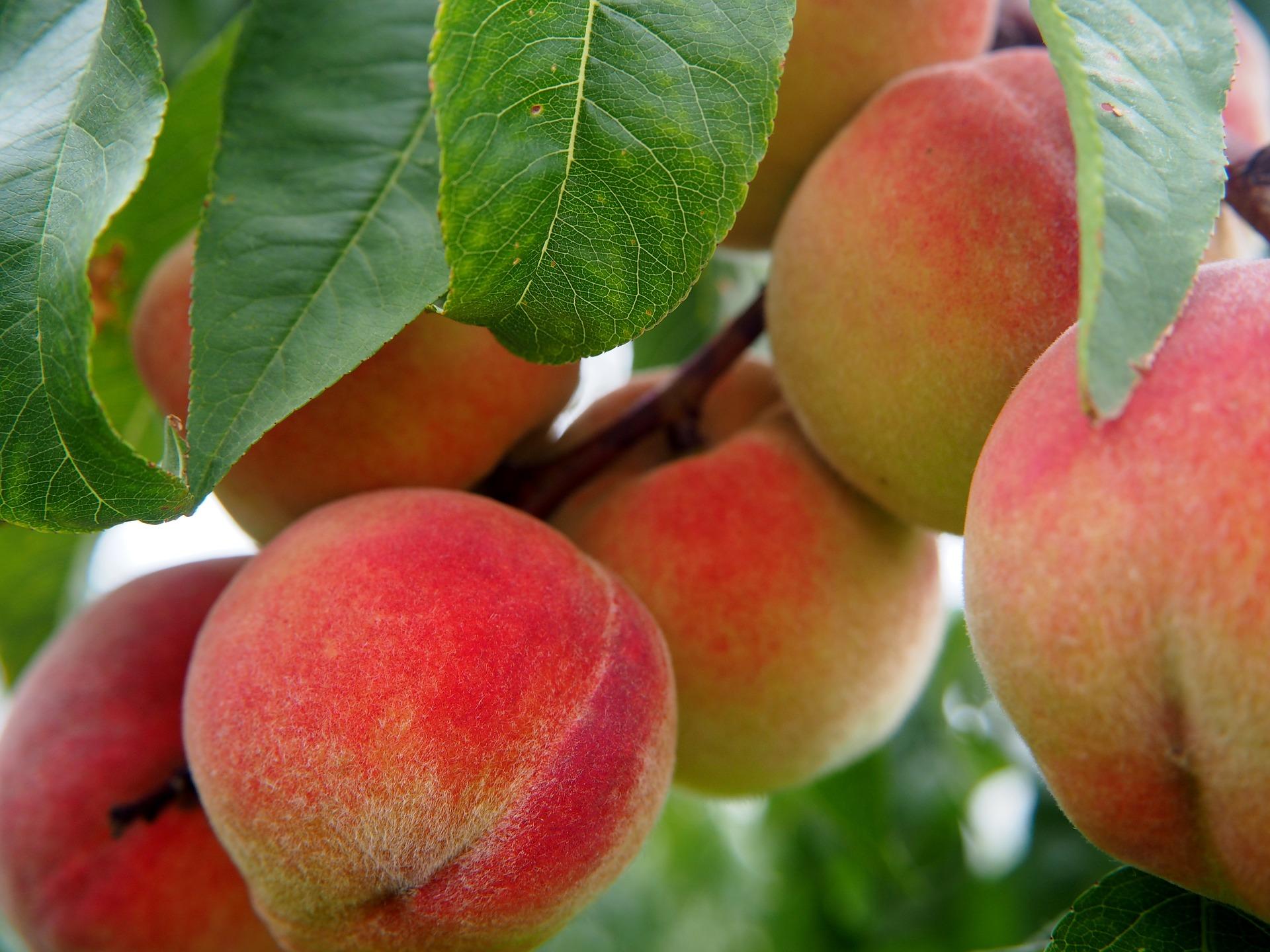 peach-2632182_1920.jpg
