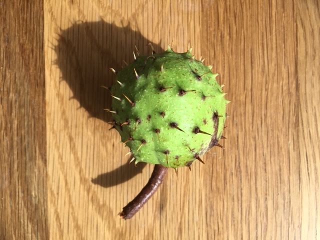 First of the conkers fallen for the season