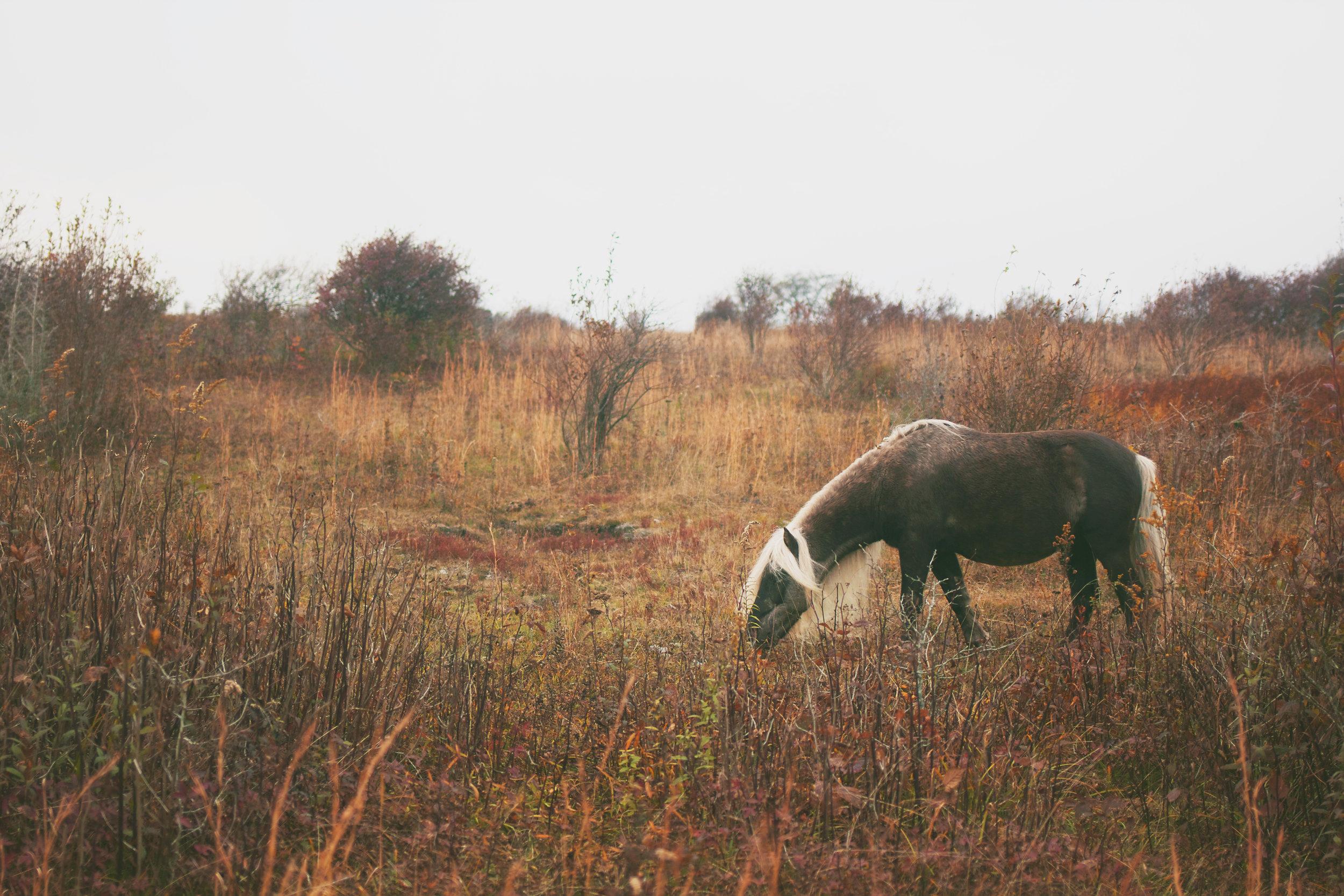 pony-land1.jpg