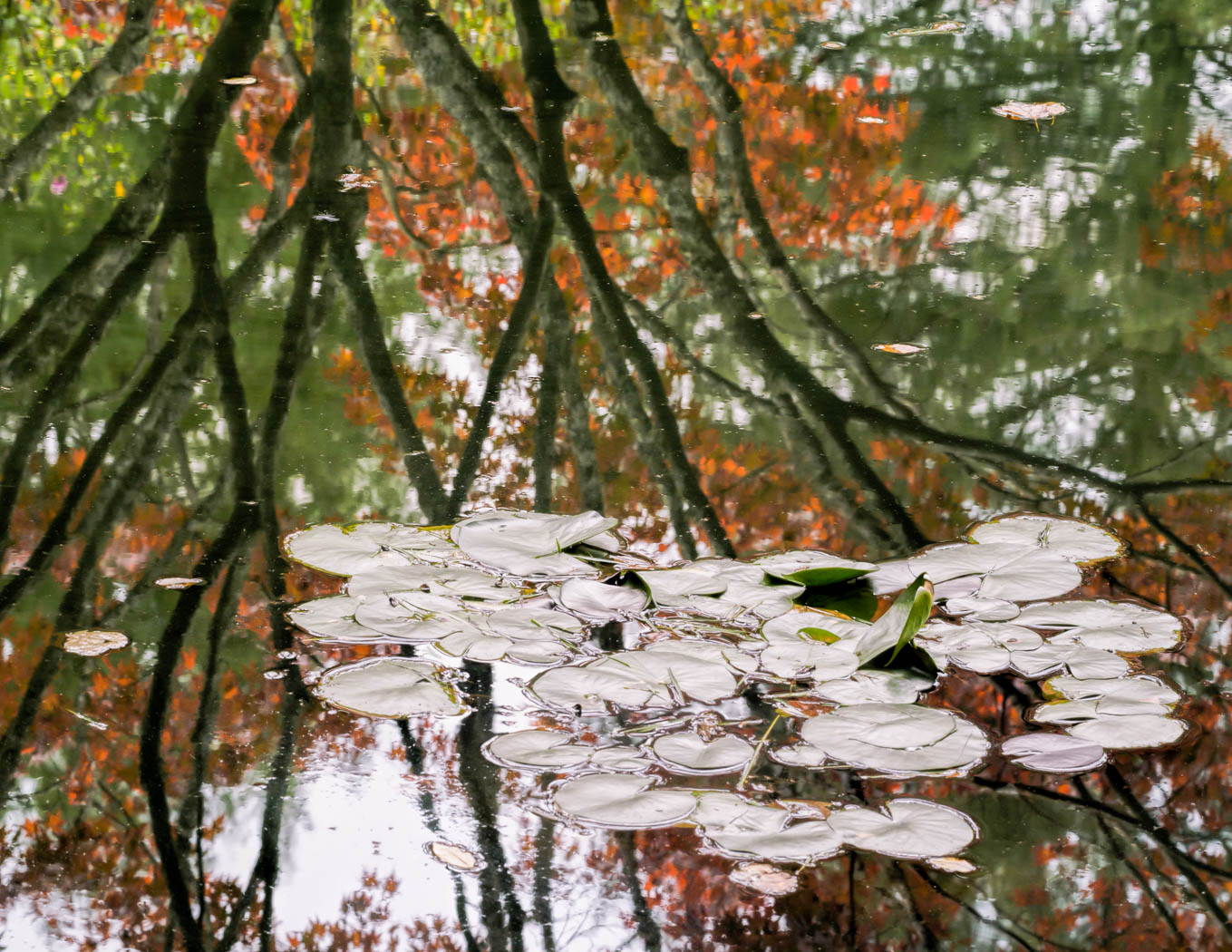 Silver Lily Pads