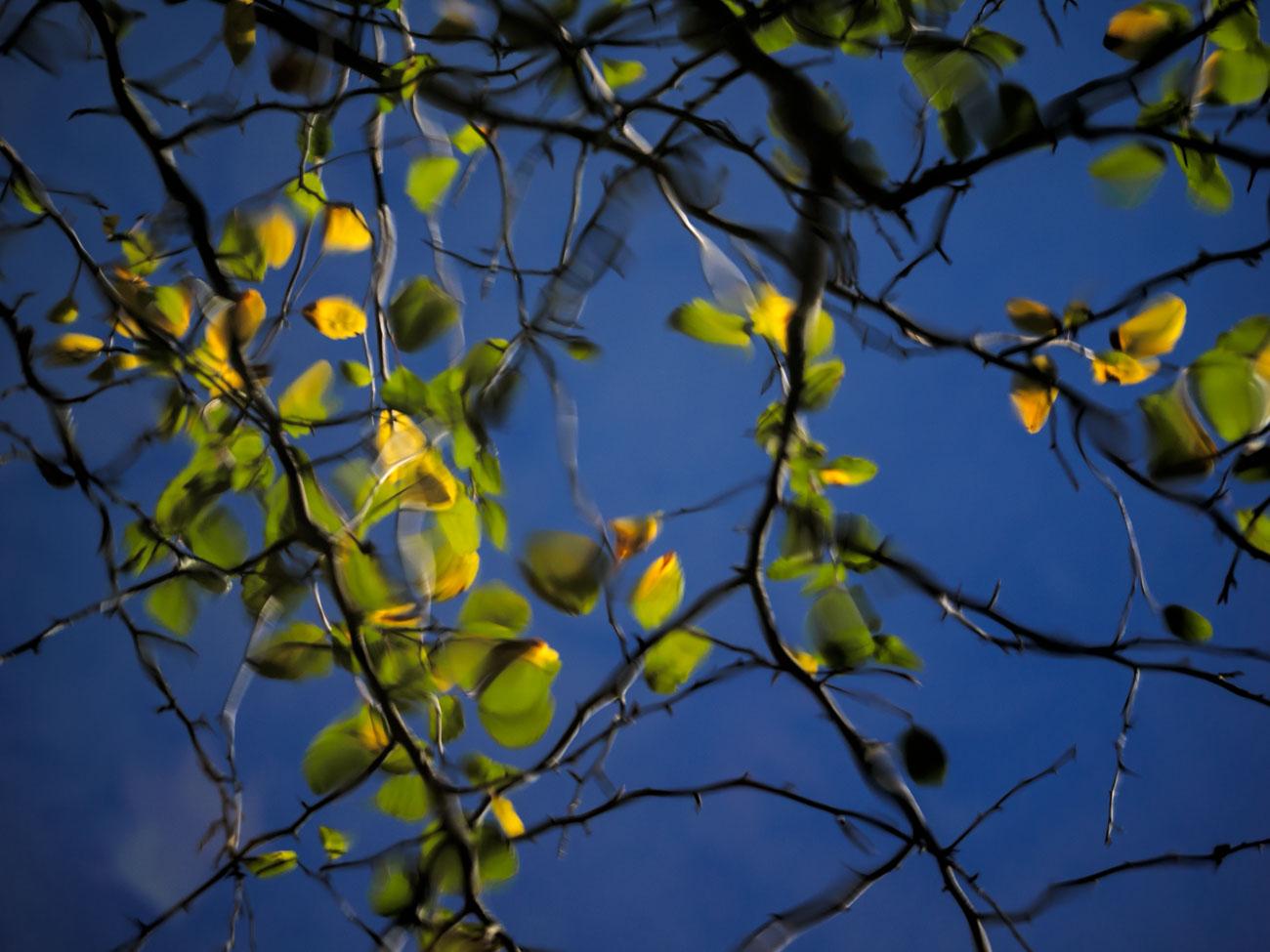 Deep Blue Reflected Sky
