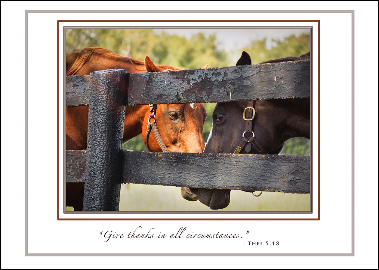 Thankful Horses