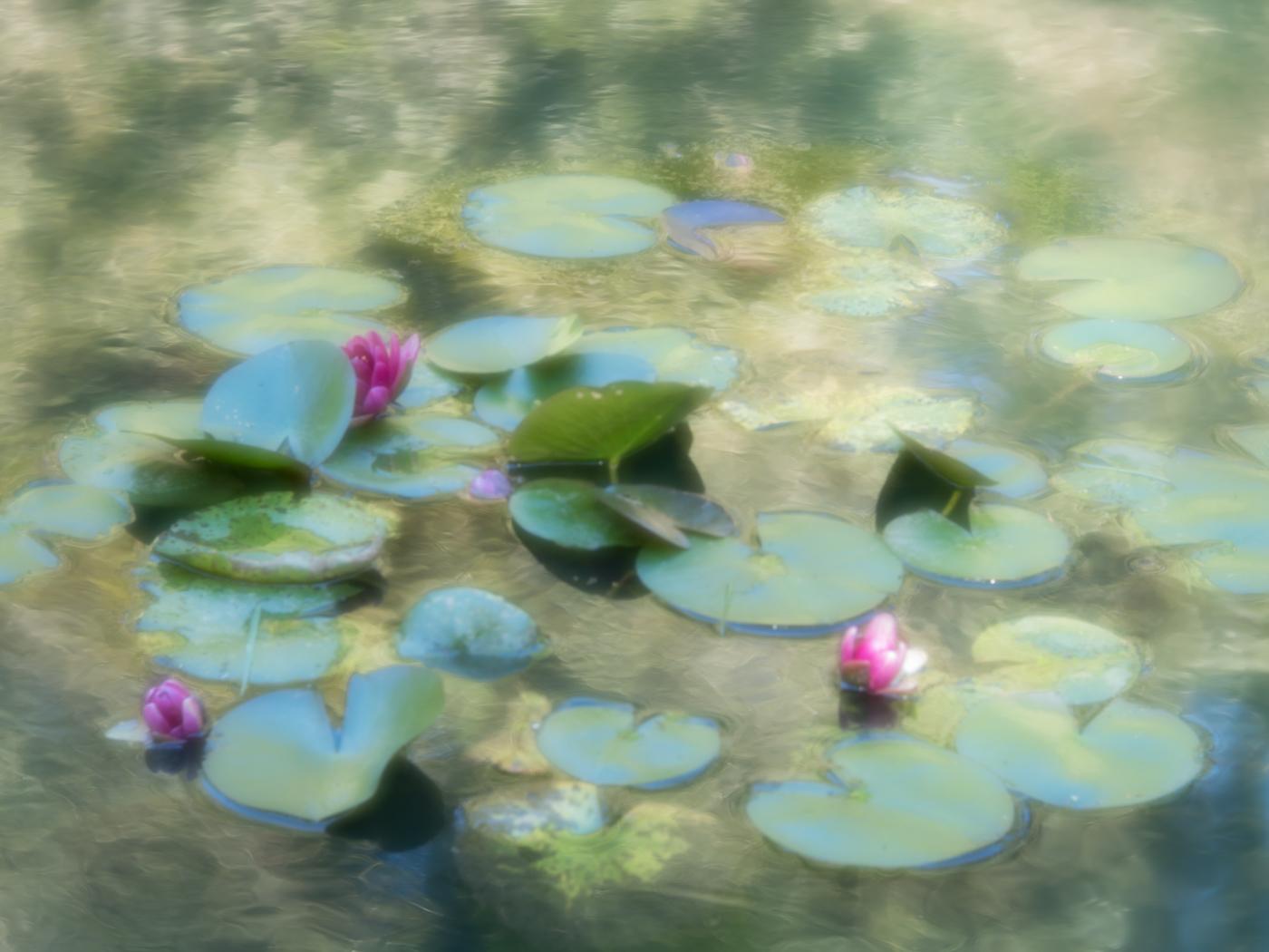 lilies Lens Baby.jpg