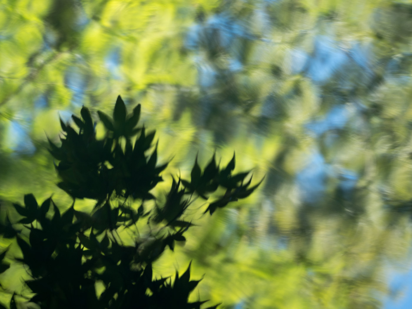 dark plant.jpg