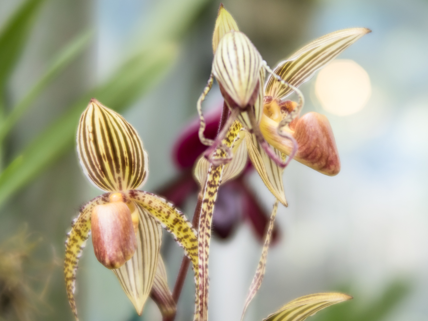 Soft backlight gives such a wonderful glow to these orchids.