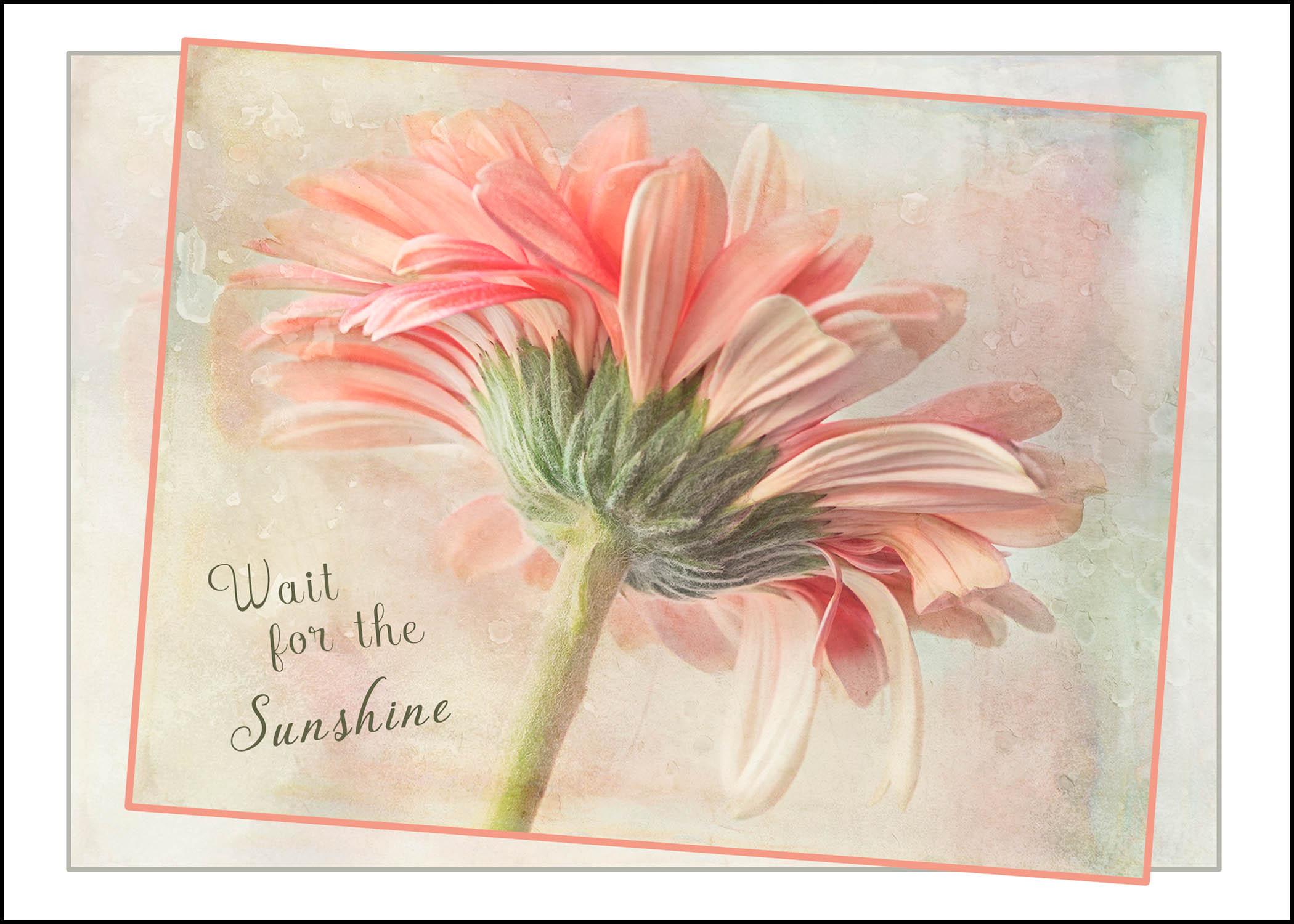 Wait for the Sunshine