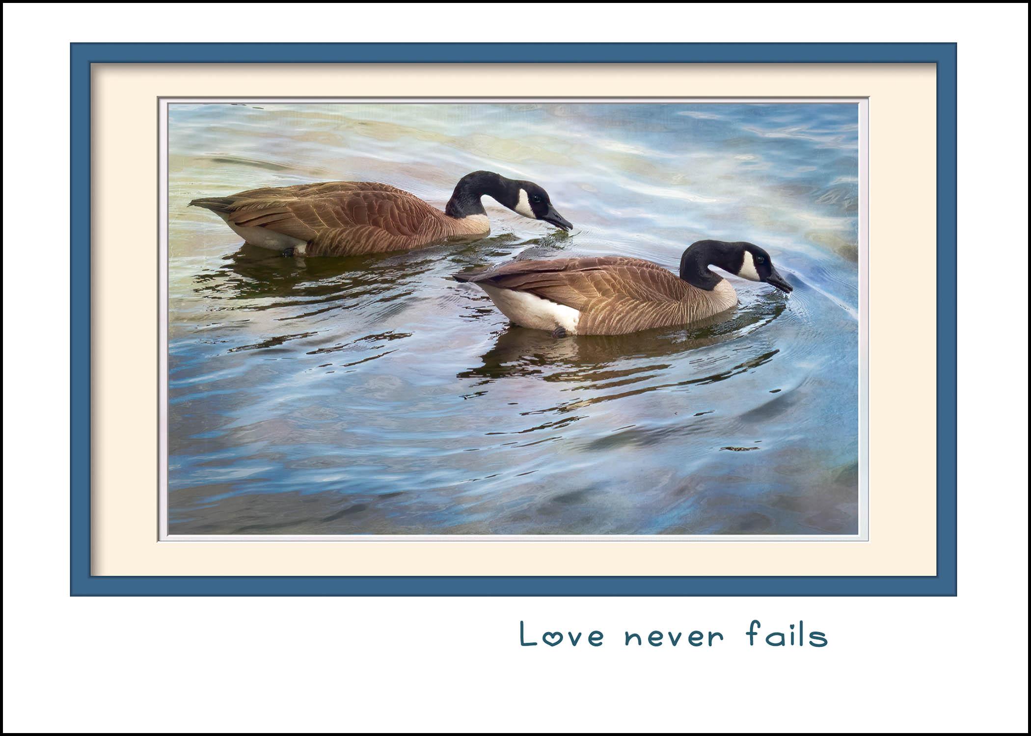 Goose Mates