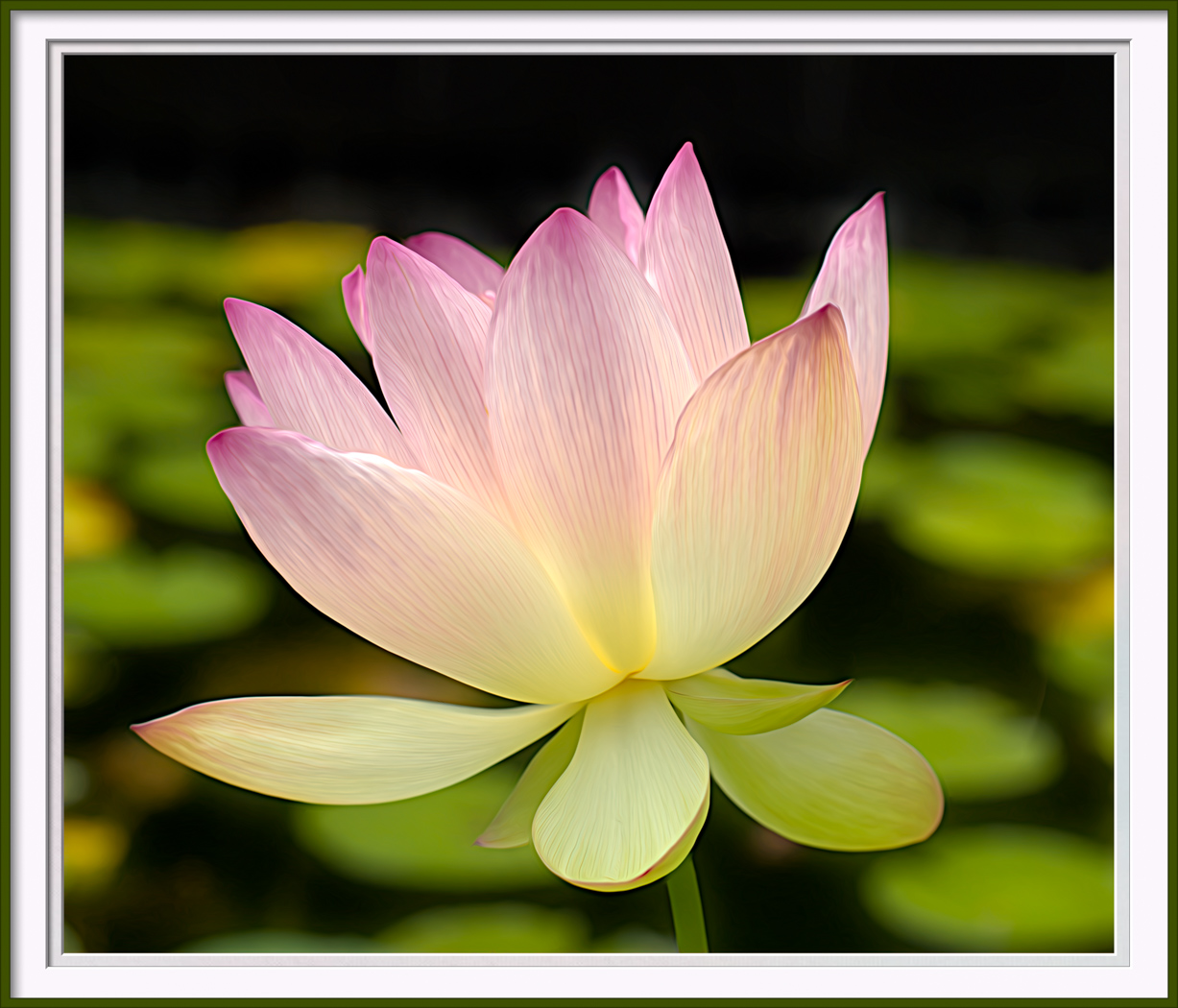 Lotus from Vines
