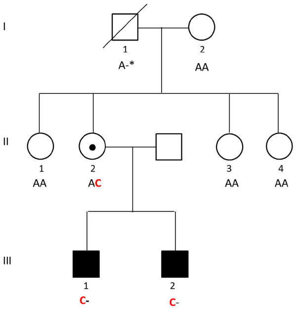 Pedigree of the family with two brothers affected by the novel intellectual disability syndrome . Males are shown as squares, females as circles. The Naa10 c.128A>C (pY43S) point mutation occurred de novo in the mother of the two affected boys (individual II:2). Both her sons (individuals III:1 and III:2) inherited the Naa10 c.128A>C. Copyright: Svein I. Støve
