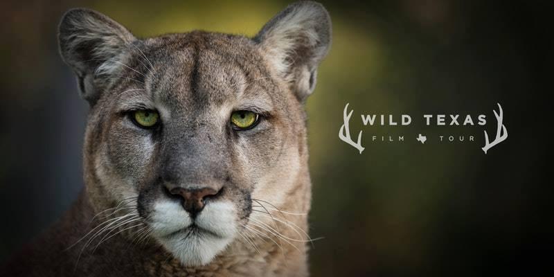 wft lion logo image.jpg