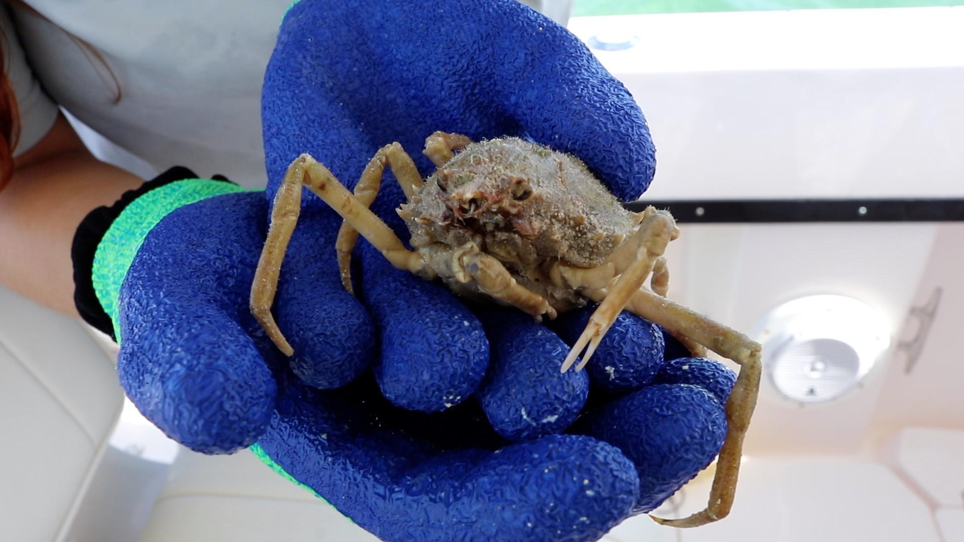 StoneCrab Image 5 crab.jpg
