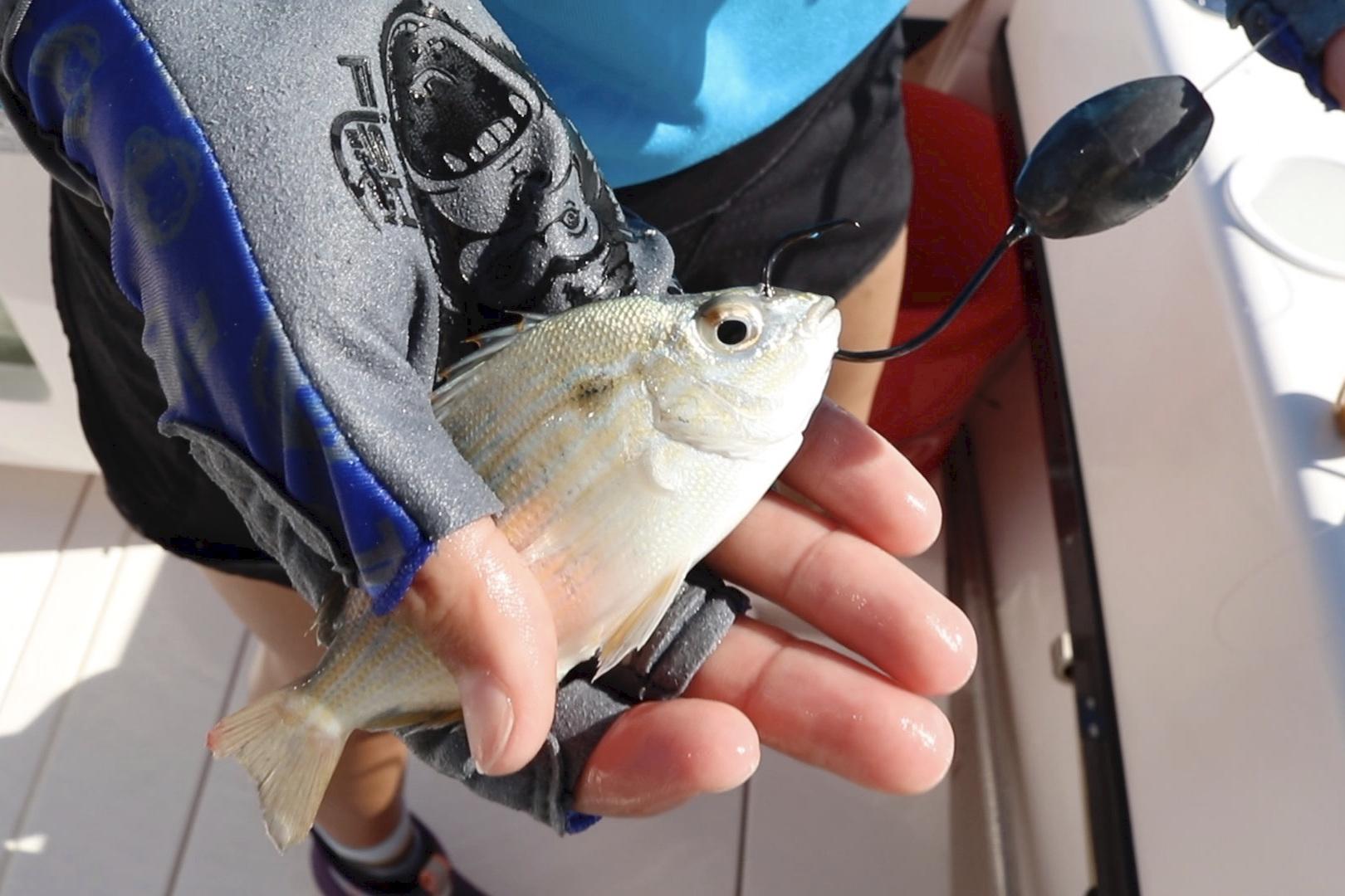 Pinfish on knocker rig