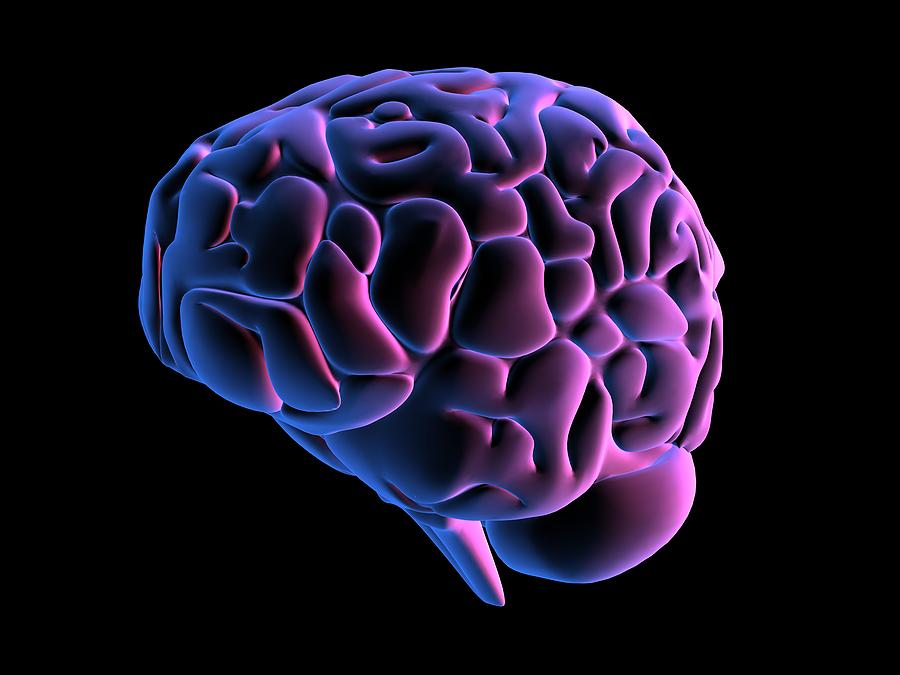 bigstock_Human_Brain_1203059.jpg