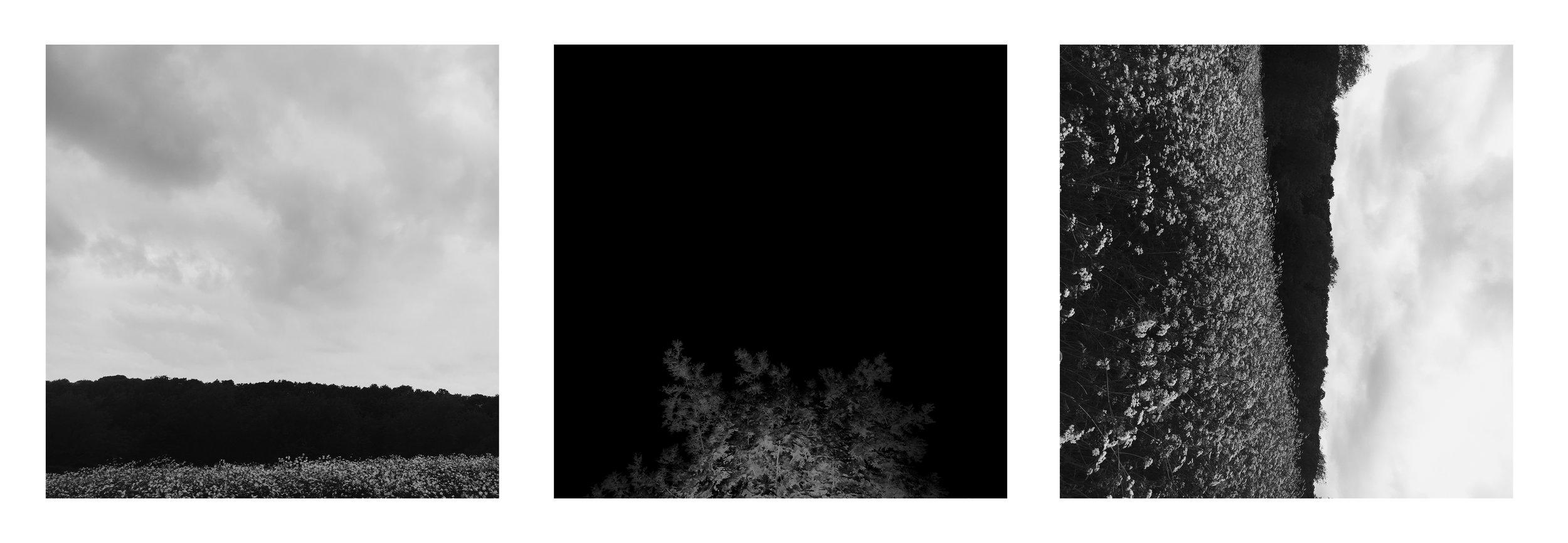 treescape trio.jpg