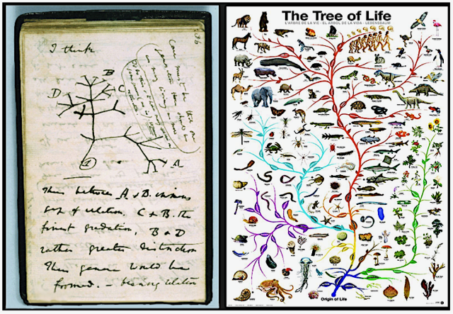 The Tree of Life, from Darwin (left) to a more recent depiction