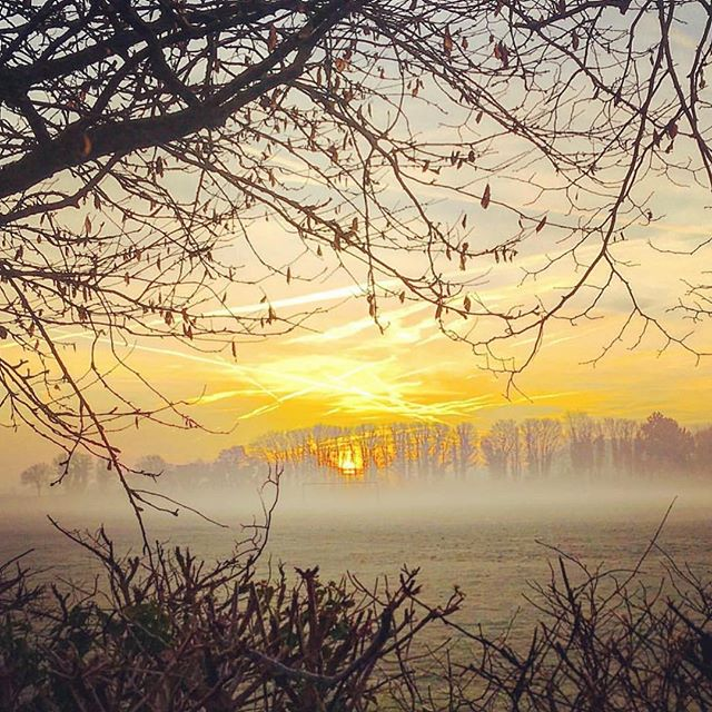 A simply glorious shot of the morning mist in the Cotswolds countryside taken on our doorstep in Woodstock, Oxfordshire by @jayaliceflowers Stunning! . . . #repost #welovewoodstock #cotswolds #cotswoldslife #getputdoors #getoutanddrive #wednesdaymotivation #thedriverstipple #mist #nature