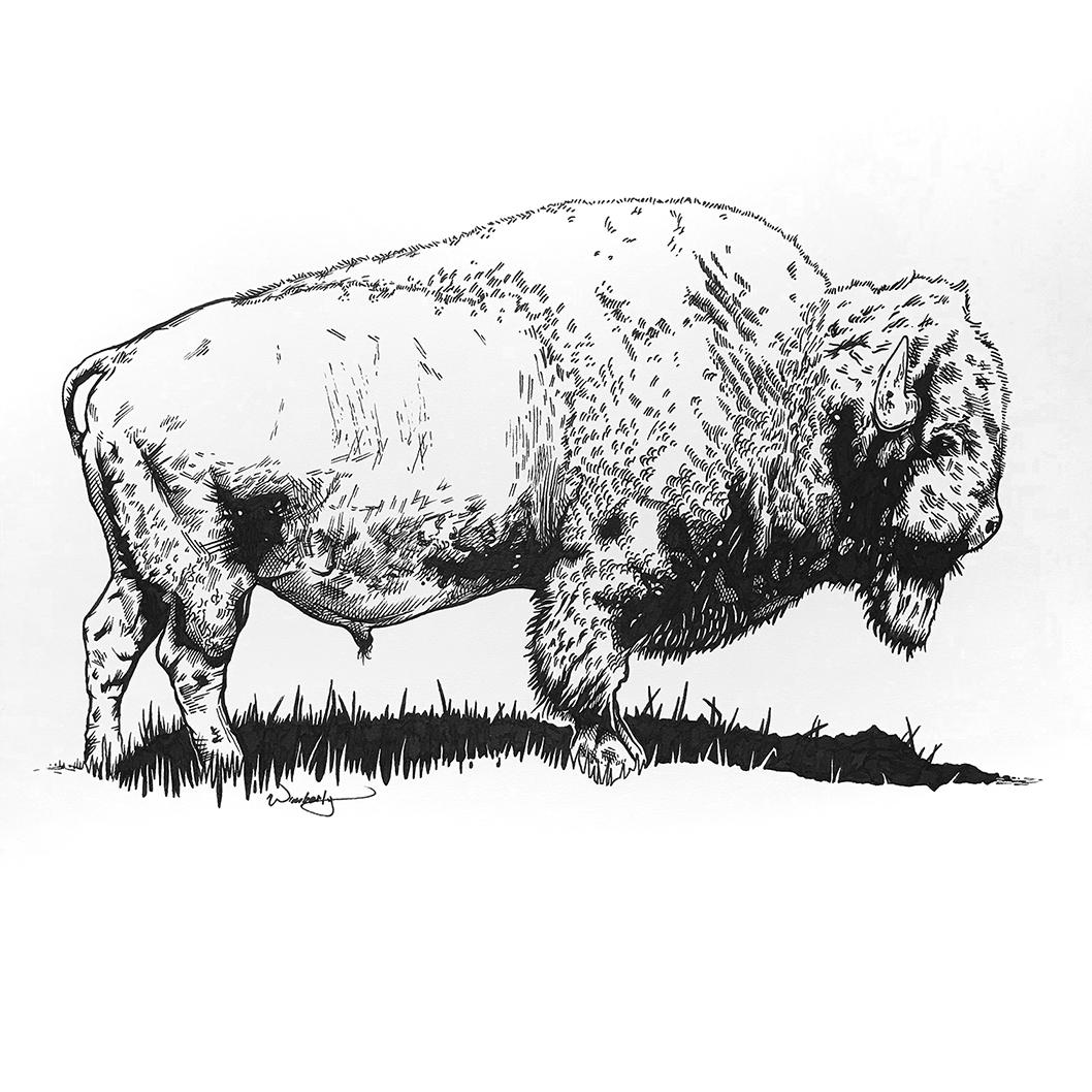 Major Bison