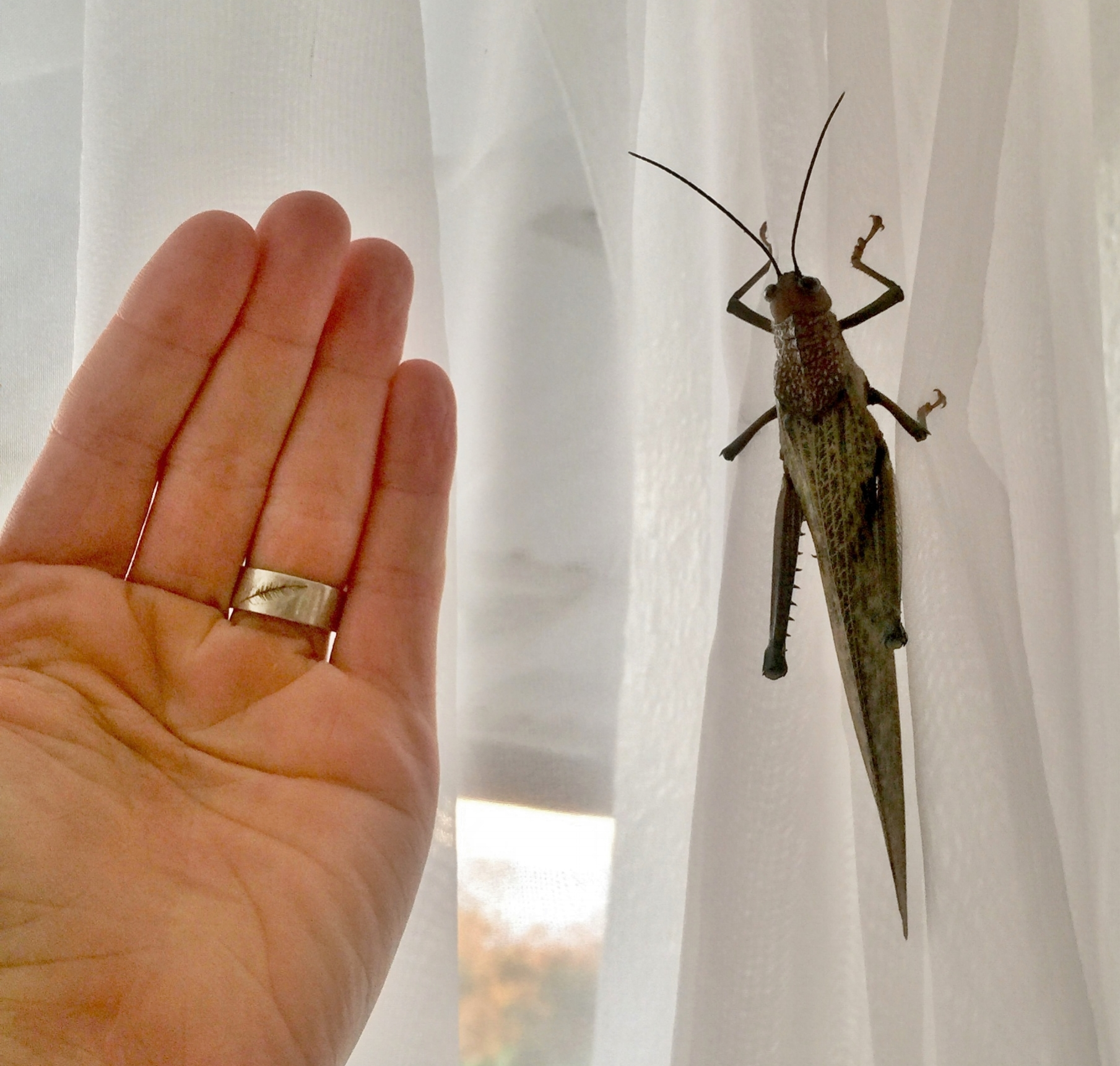 So the bugs here are big.