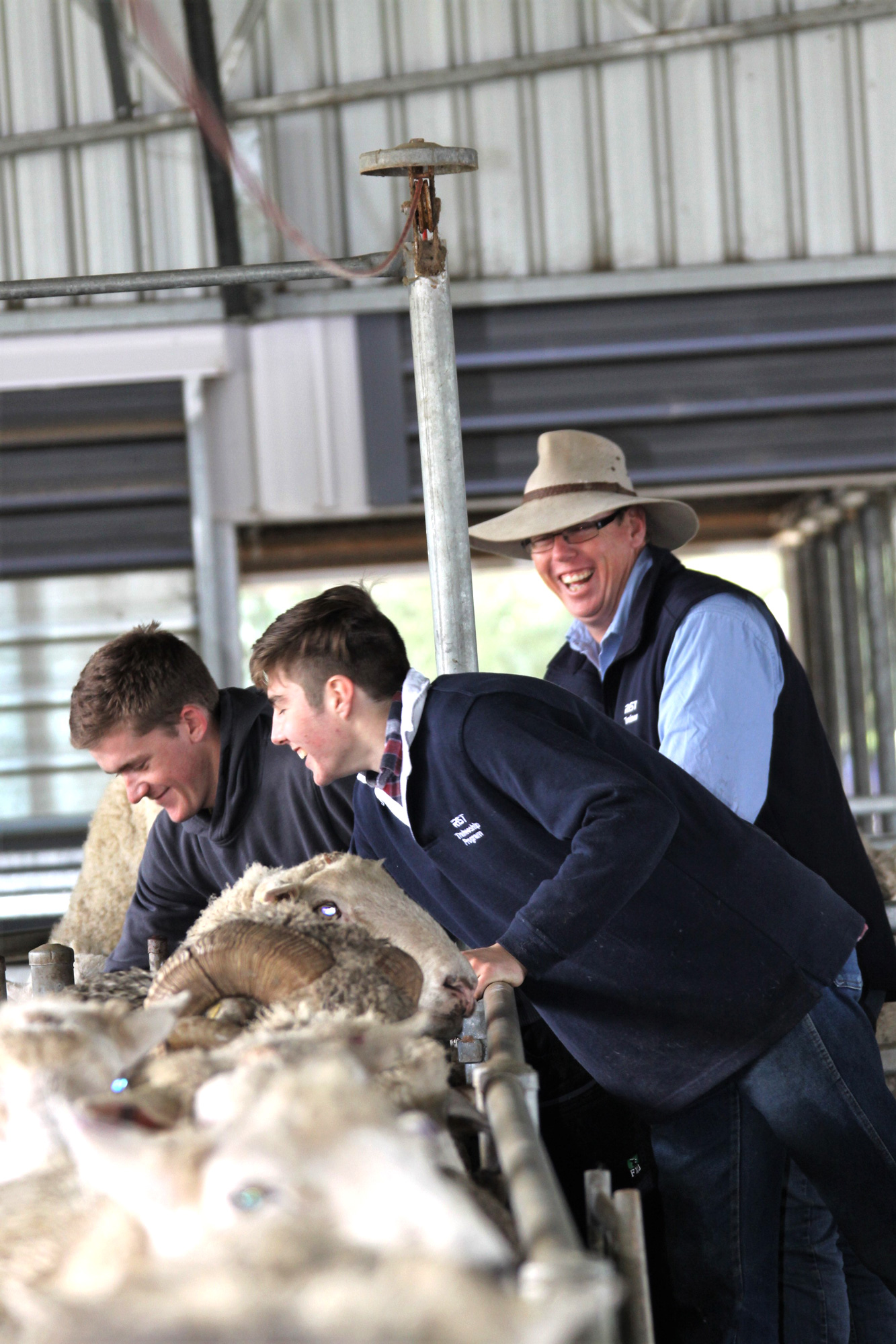 RIST sheep check 2.jpg