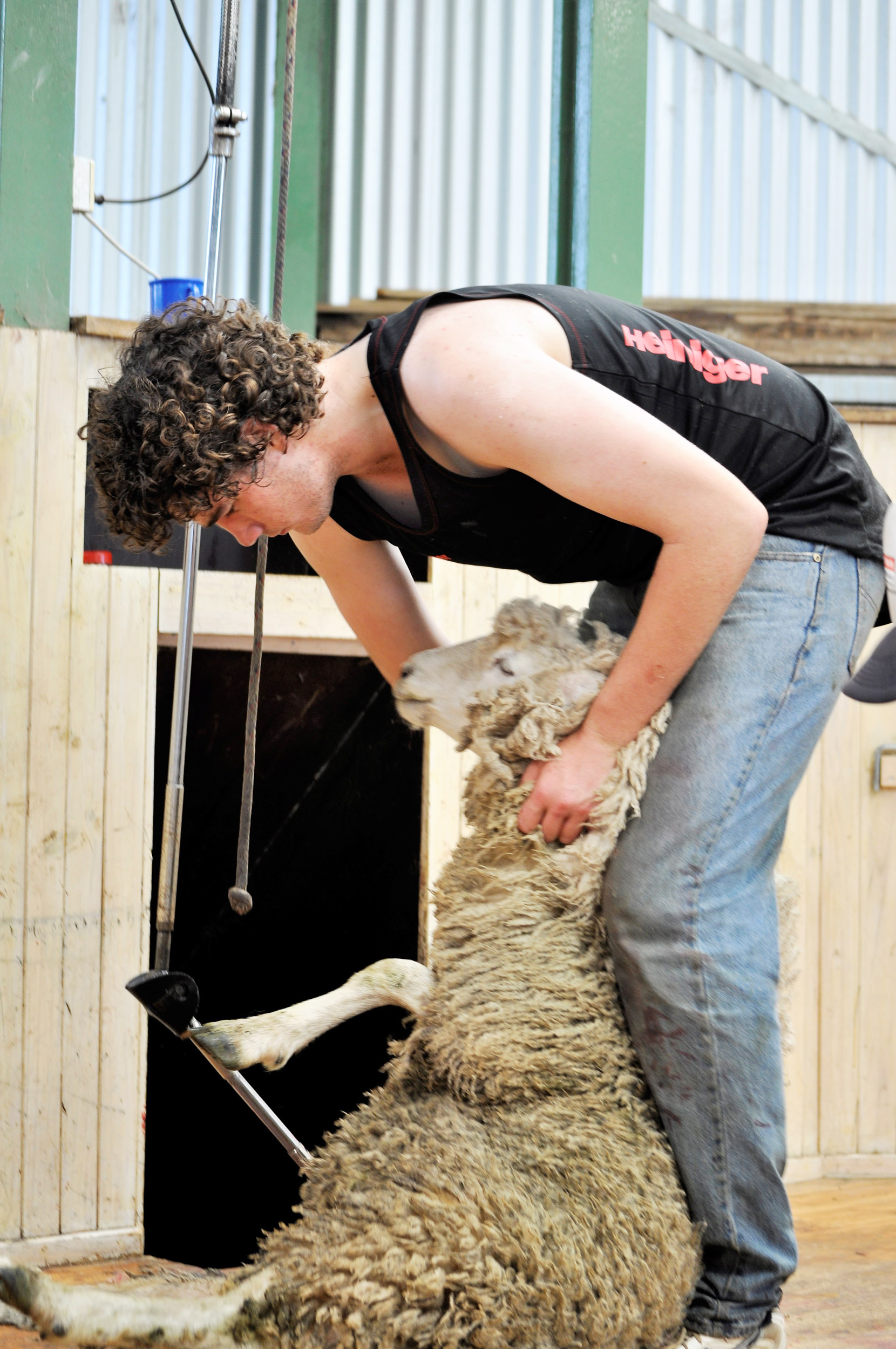 rist-agricultural-collegeshearing-01.jpg