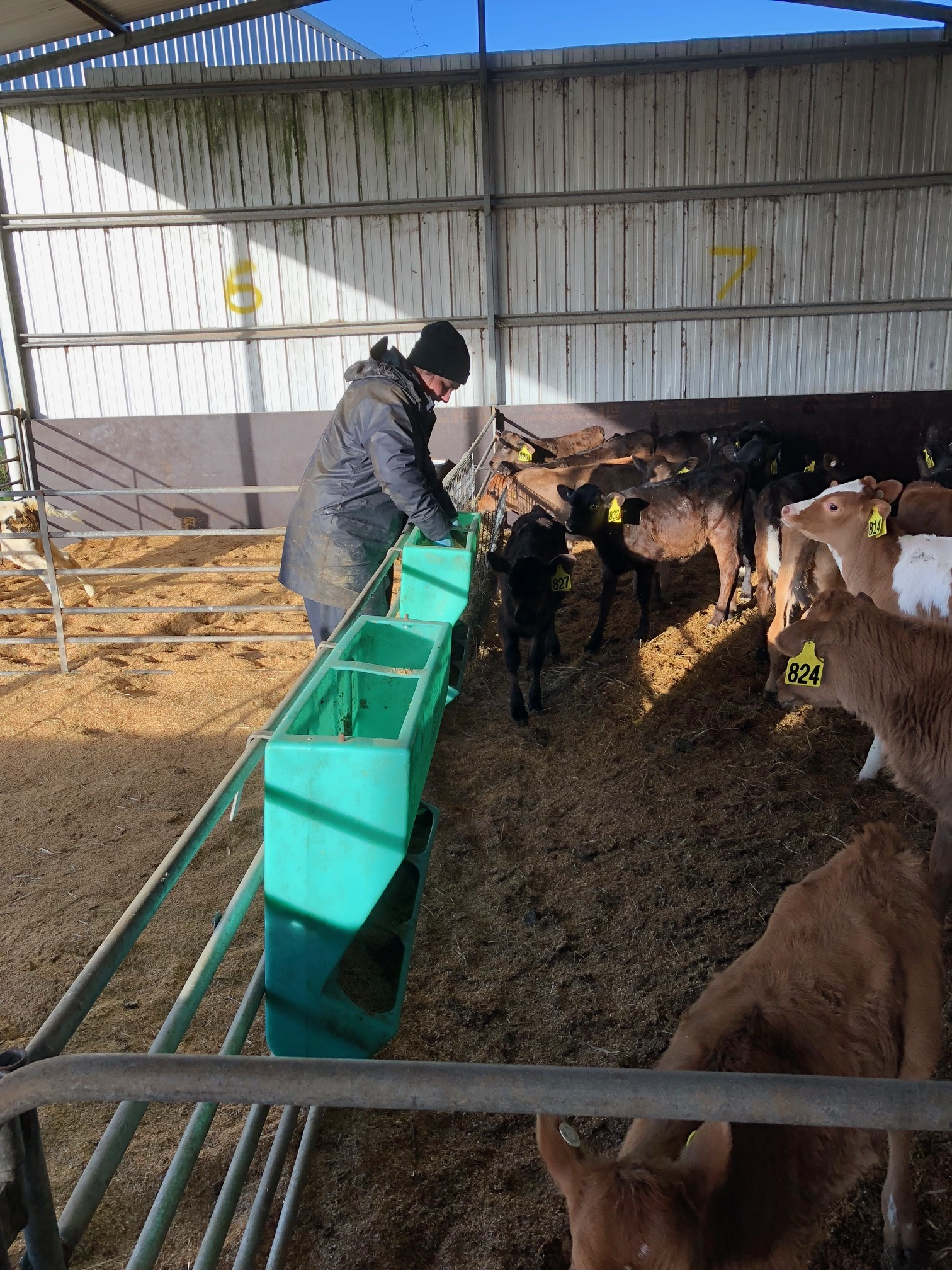 RIST Agricultural College Dairy Industry Victoria