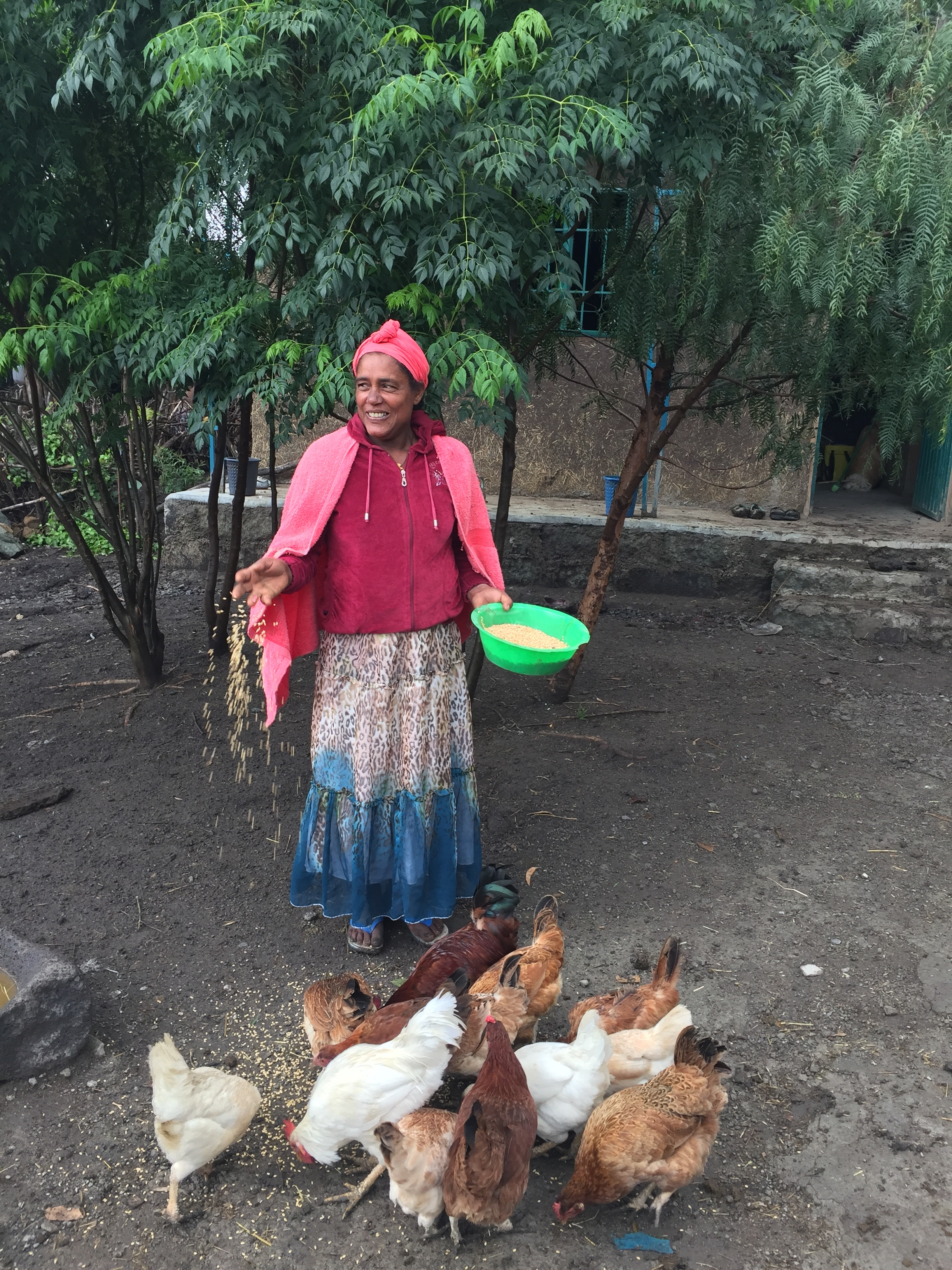 A community member in Oromia feeds her chickens.
