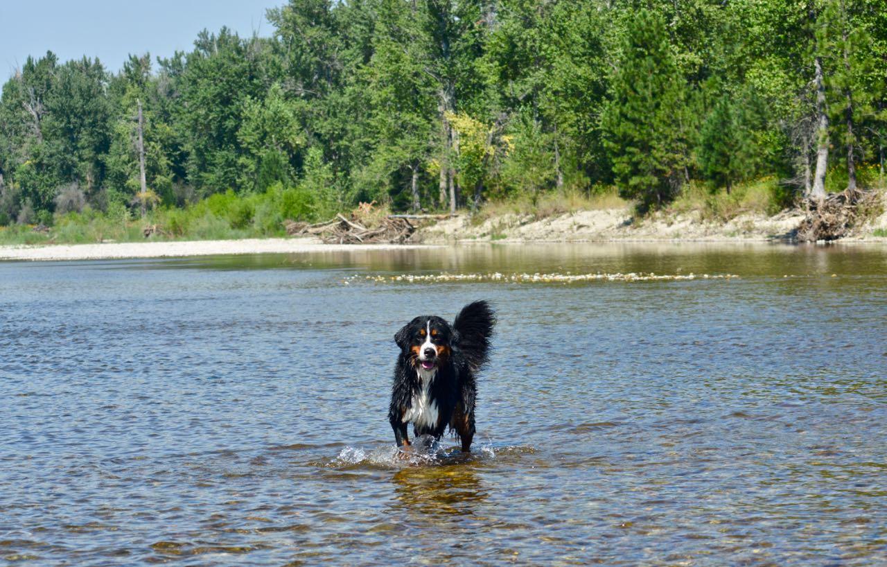 31 Daisy in River (1).jpg