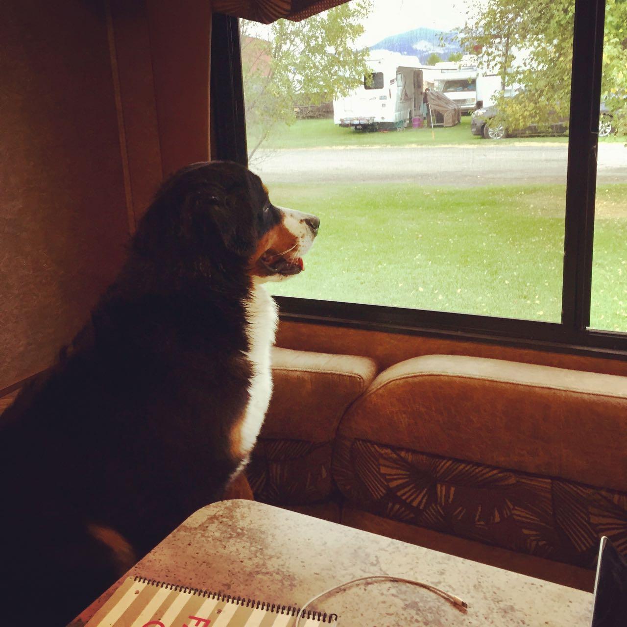 Daisy looking out window.jpg