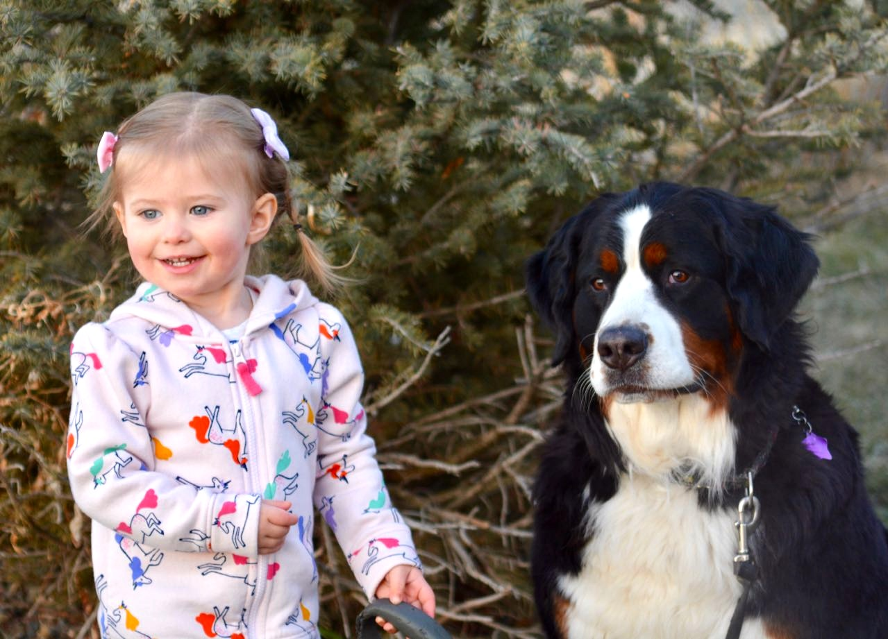 Life with Dogs offers children the opportunity to learn and practice important prosocial skills — and for adults to model those skills.