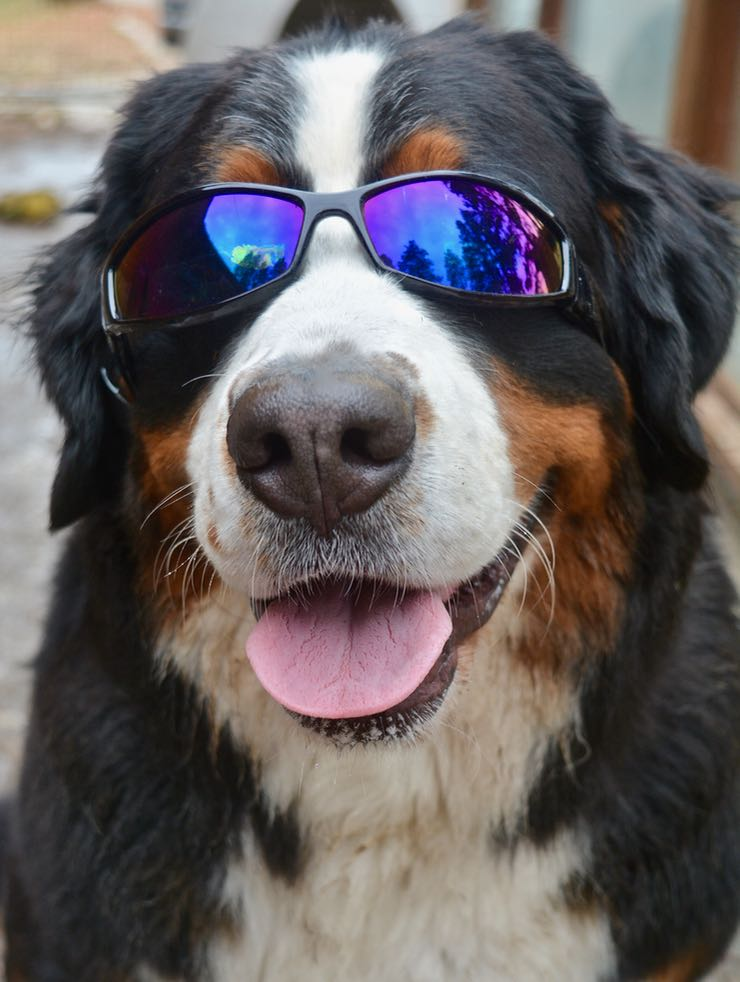 8 Sparkle in glasses.jpg