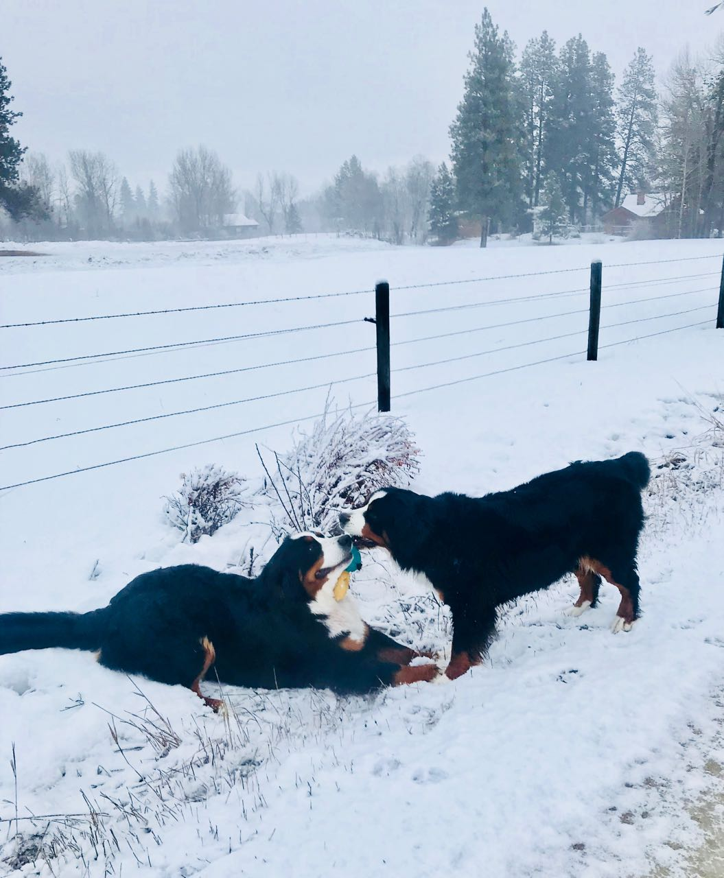 Claire and Sparkle do not object to winter at all.