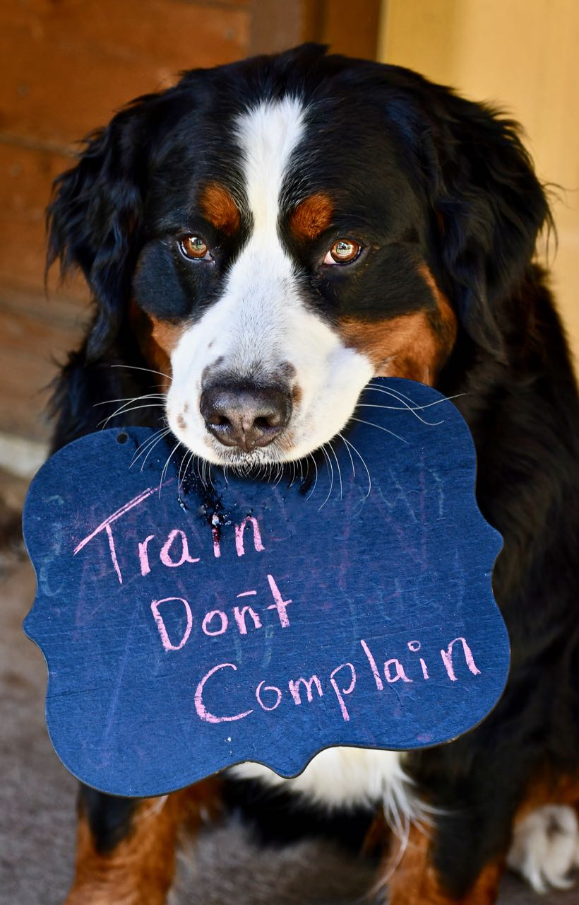 …and the training means human and dog…