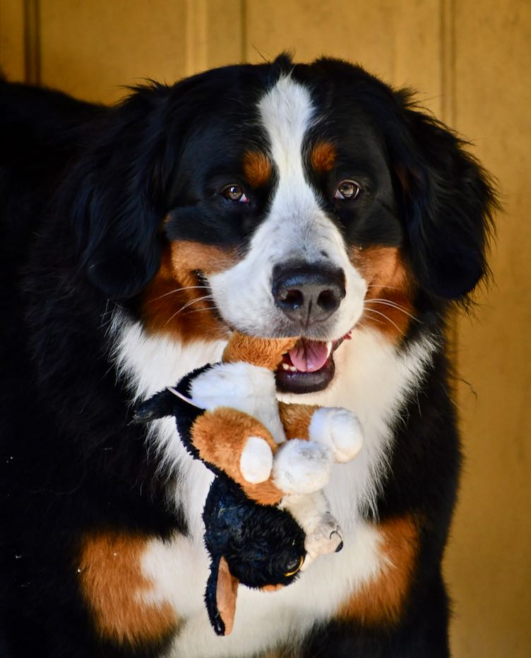 Claire and puppy (stuffed) June 2019.jpg