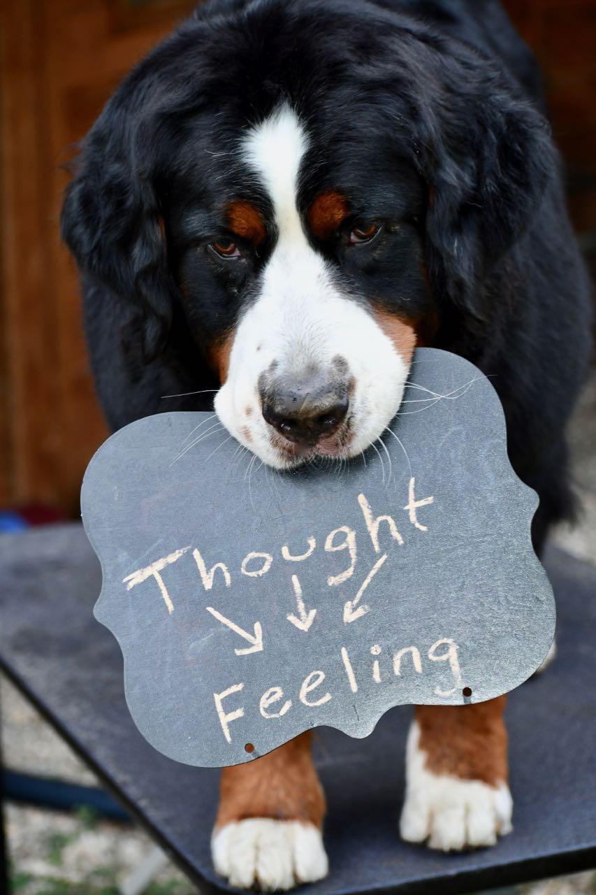Thought Feeling.jpg