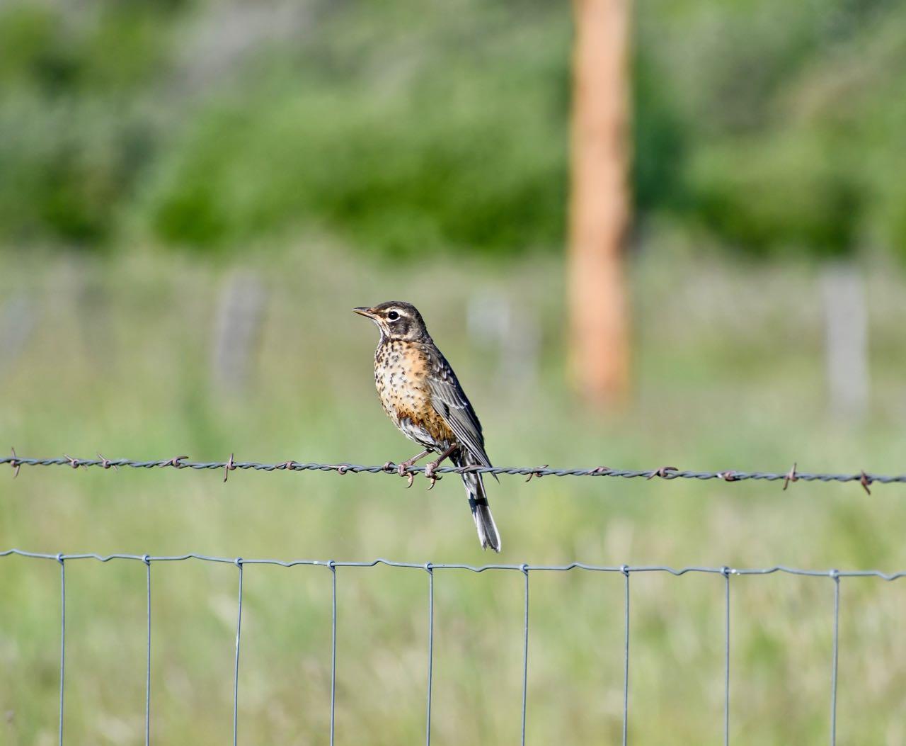 Bird ?.jpg