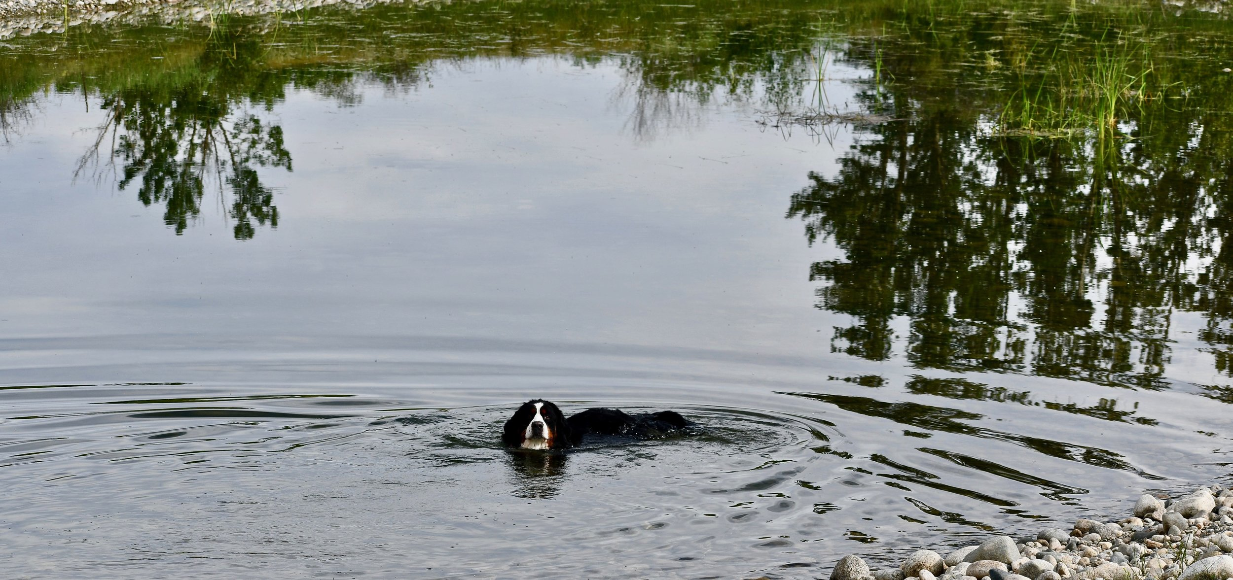 Sparkle in pond (2).jpg