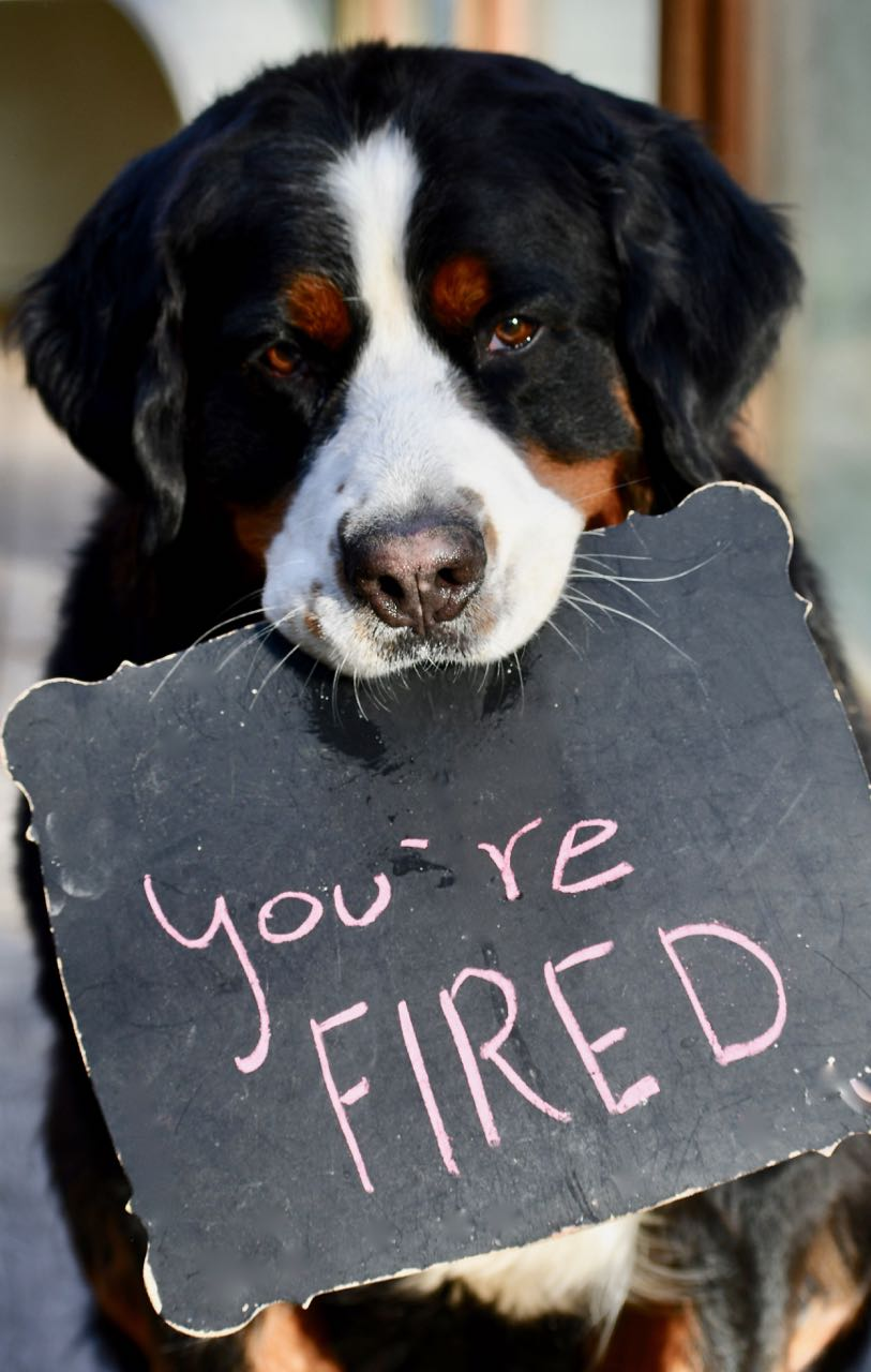 You're Fired.jpg