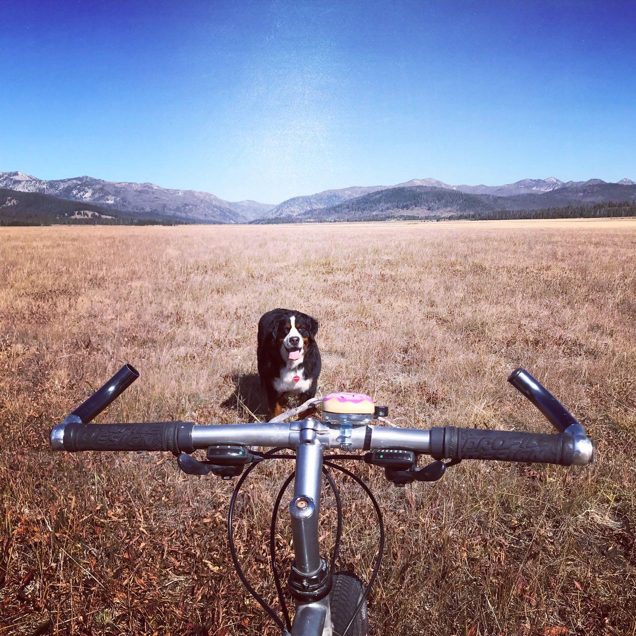 Bike and dog Stan;ey.jpg