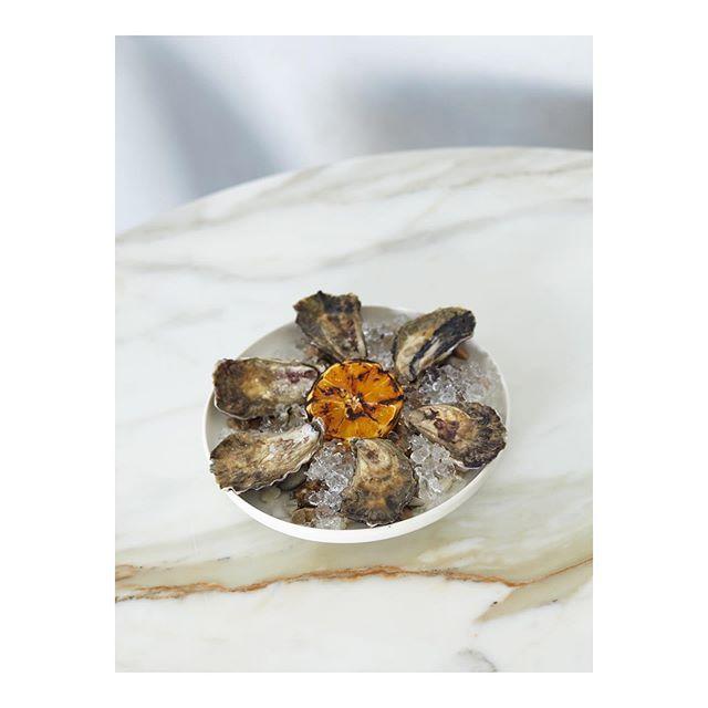Freshly shucked live Sydney rock oysters, burnt orange. . . #pecarestaurant #daily #seafood #sydneyrockoysters #gregoryhills #somawellness #adriatic #coast