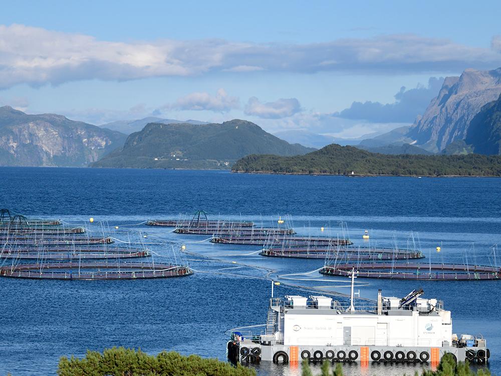 Miljøprofil - Svanøy Havbruk AS har rutiner og prosedyrer for å analysere, revidere og kvalitetssikre alle kritiske punkter i vår produksjon. Vi skal til enhver tid ha systemer for å ha løpende kontroll med vår påvirkning av miljøet rundt oss. I vår daglige drift plikter vi å føre risikobasert tilsyn med forhold av betydning for miljøet, arbeidernes helse og velferden for fisken vi produserer.Gjennom vårt omfattende IK og HMS-system har Svanøy Havbruk mellom annet:- en miljø- og biomangfoldsplan der vi har målsetning om å kontinuerlig arbeide for å ha en bærekraftig produksjon med minimal påvirkning av ytre miljø, og en aktivitet som ivaretar artsmangfold og dyreliv i nærområdet til våre anlegg.- rutiner for miljømessig god og effektiv drift. Ansatte får grundig opplæring og har et ansvar for å følge selskapets rutiner.- beredskapsplaner for aktiviteter med risiko (f.eks rømming, personskade, fiskedød)