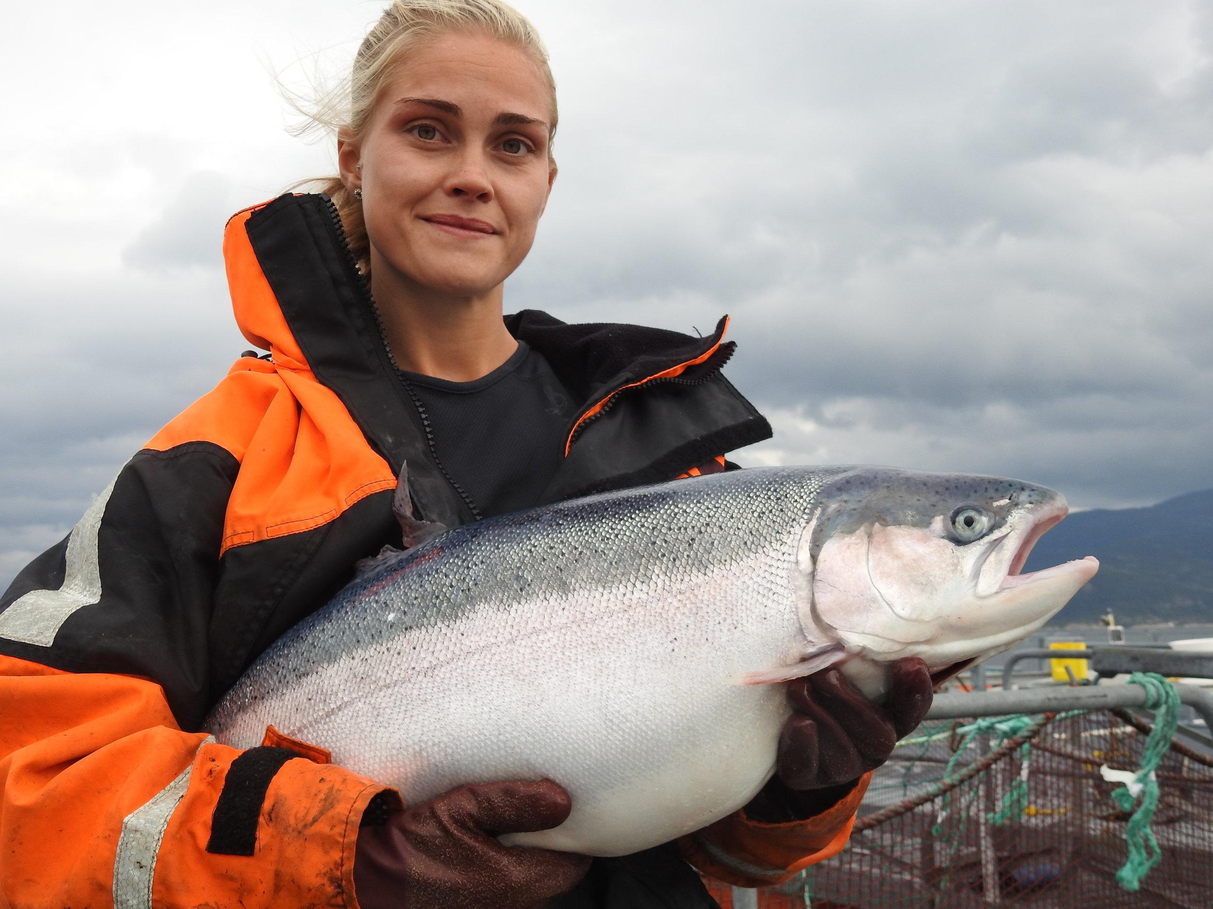 Fiskevelferd - God fiskehelse er grunnmuren for lønnsom og bærekraftig produksjon. Svanøy Havbruk har egen fiskehelseansvarlig med relevant biologutdanning. I tillegg har vi avtale med Akvavet i Gulen, som har månedlige veterinærbesøk for å se på fisken vår. Mattilsynet kommer også jevnlig på visitt for å følge med på at fisken har det bra. Vi arbeider kontinuerlig for optimal fiskehelse og dyrevelferd i våre anlegg, med målsetning å oppnå best mulig helsestatus på fisken og sikre god dyrevelferd. Vi har fokus på å skåne fisken for stress, ubehag og smerte; både under oppdrett, avlusing, transport og slakting.