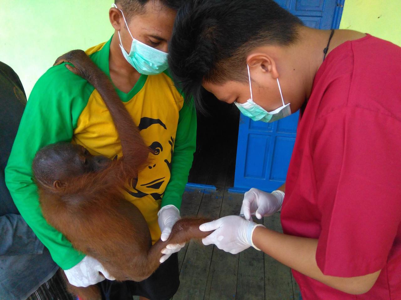Orangutan Rescue and Release Vet with young orangutan.jpg