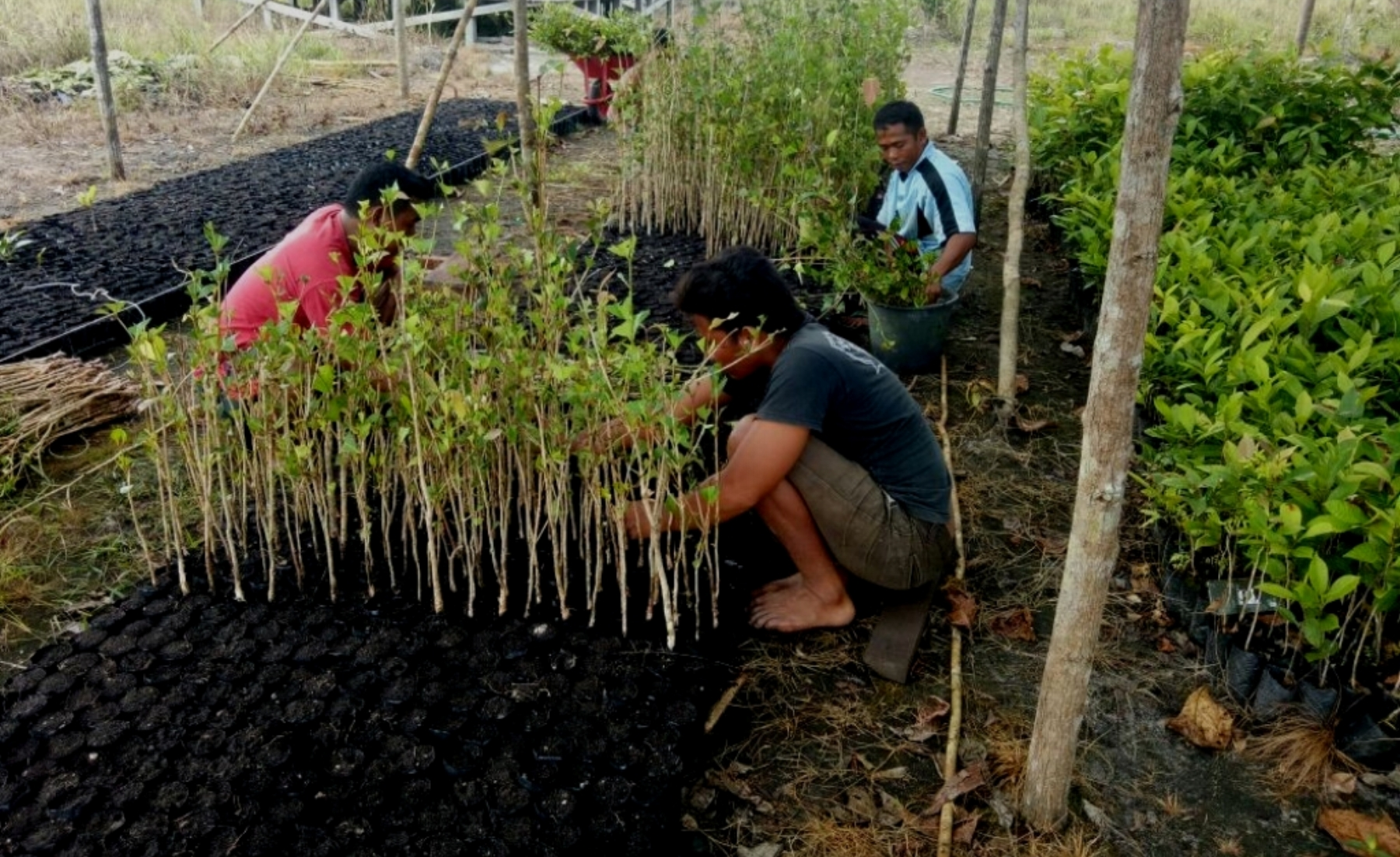 Forest Restoration Nursery, Lamandau Wildlife Reserve